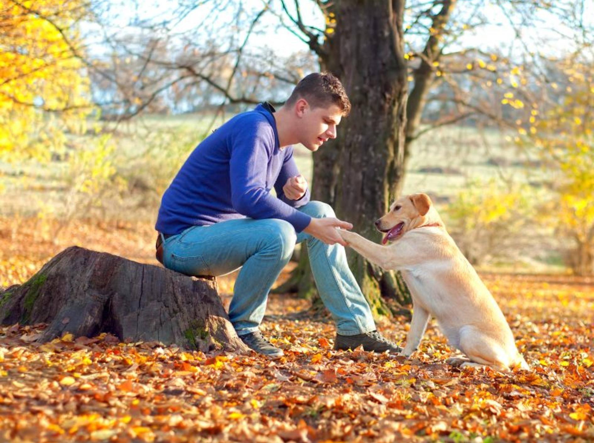 """""""Sitz!"""" ist eines der Kommandos, die der Hund für den Hundeführerschein beherrschen muss — Bild: Shutterstock / bogdanhoda"""