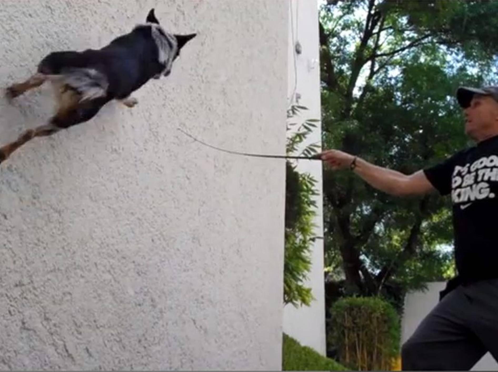 Superhund Jumpy zeigt Kunststücke für Fortgeschrittene