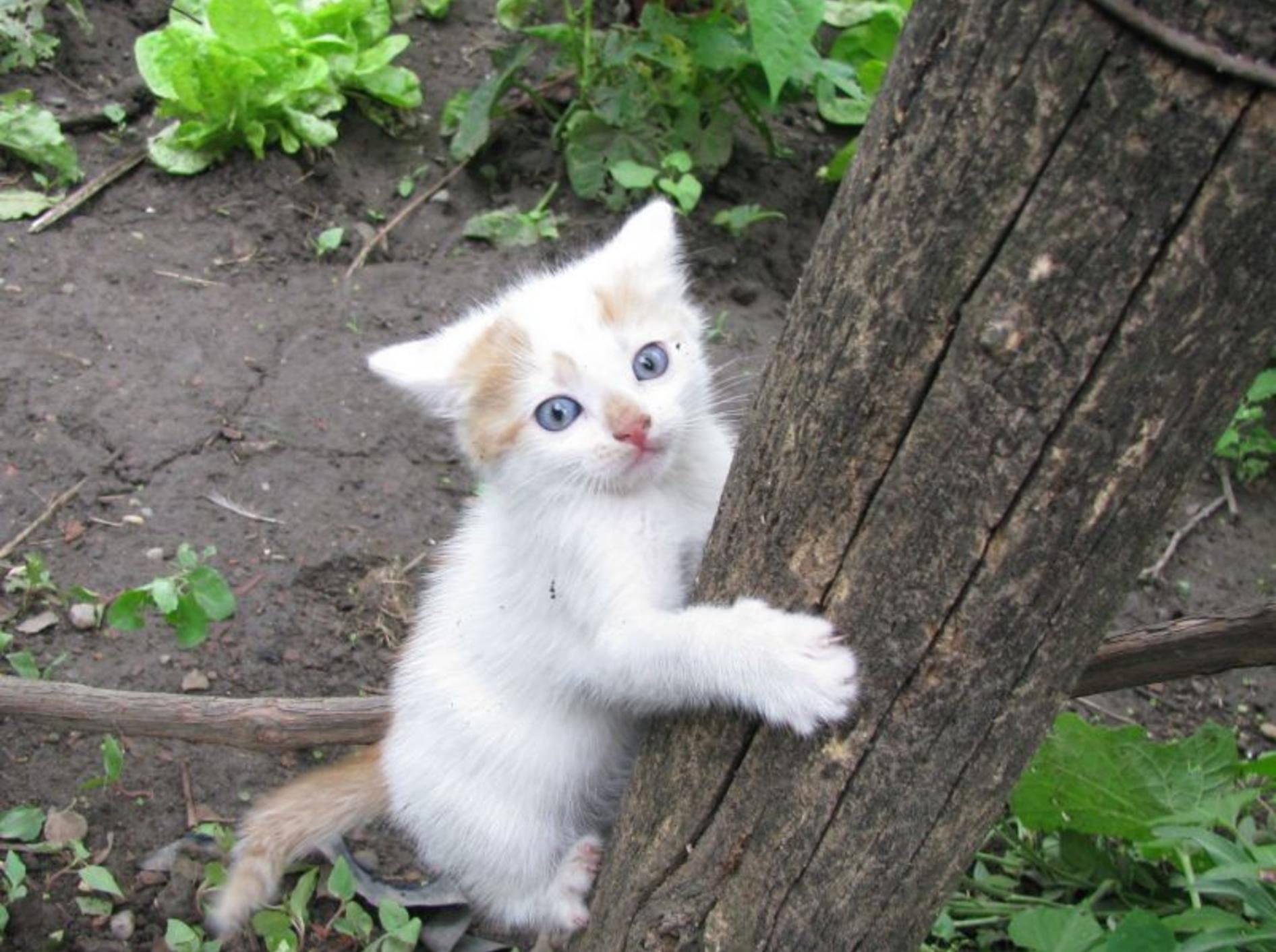"""""""Hilfe, der sieht so hoch aus!"""" Katzenbaby macht einen Kletterversuch — Bild: Shutterstock / Sorina Madalina Androne"""