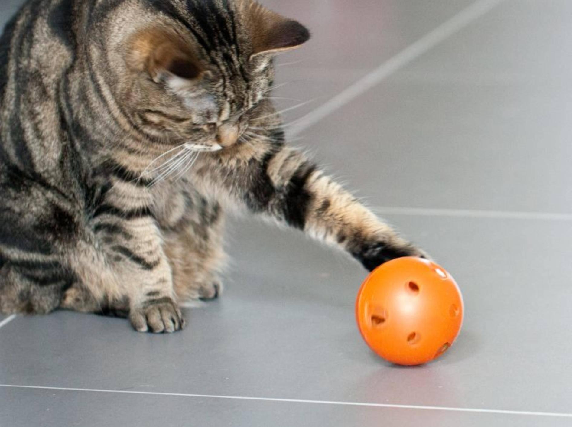 Beschäftigung für den Stubentiger: Der Futterball — Bild: Shutterstock / Anna Morgan