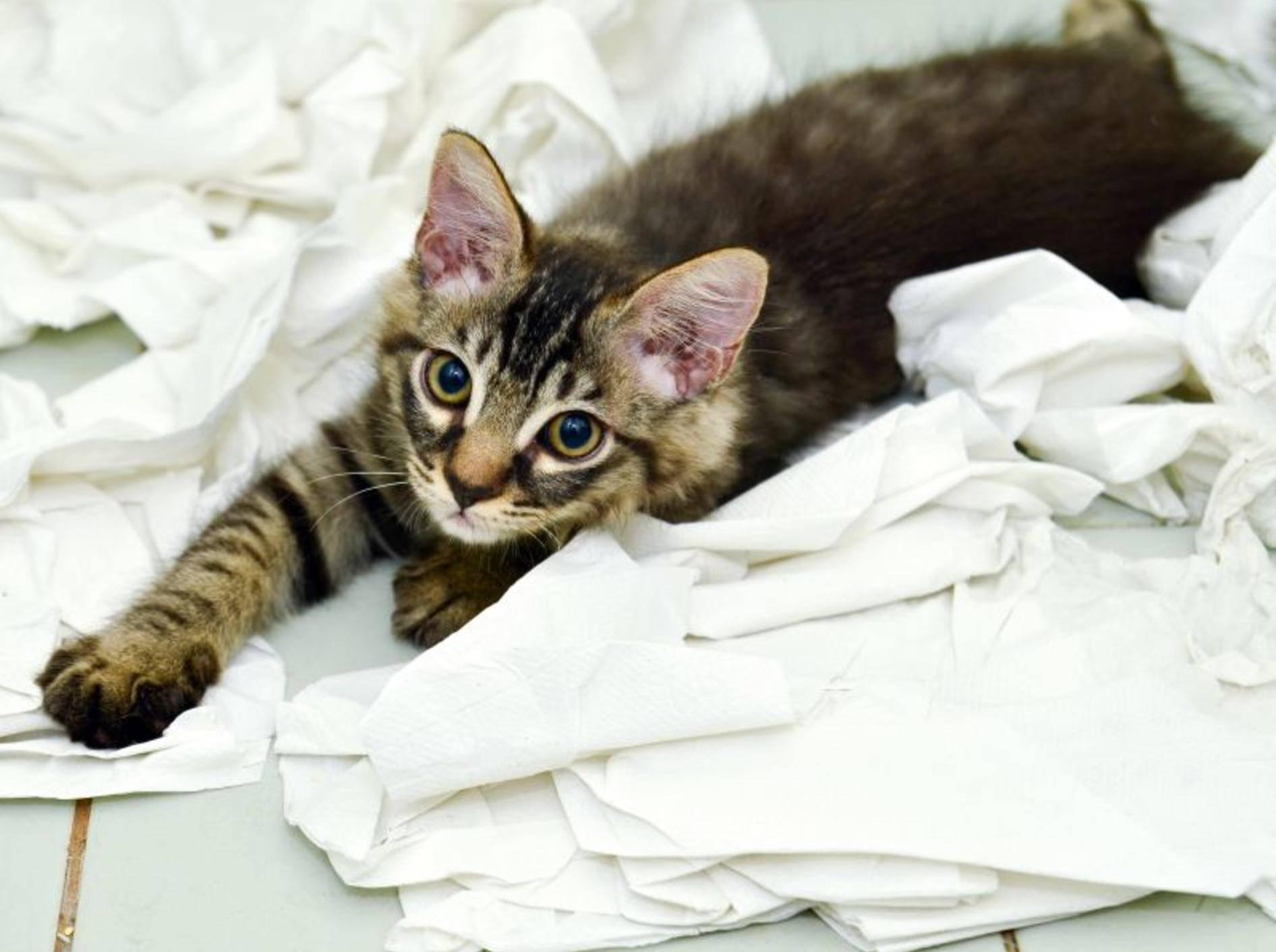 Diese Katze hat noch nicht ganz die richtige Katzenstreu gefunden — Bild: Shutterstock / hwongcc