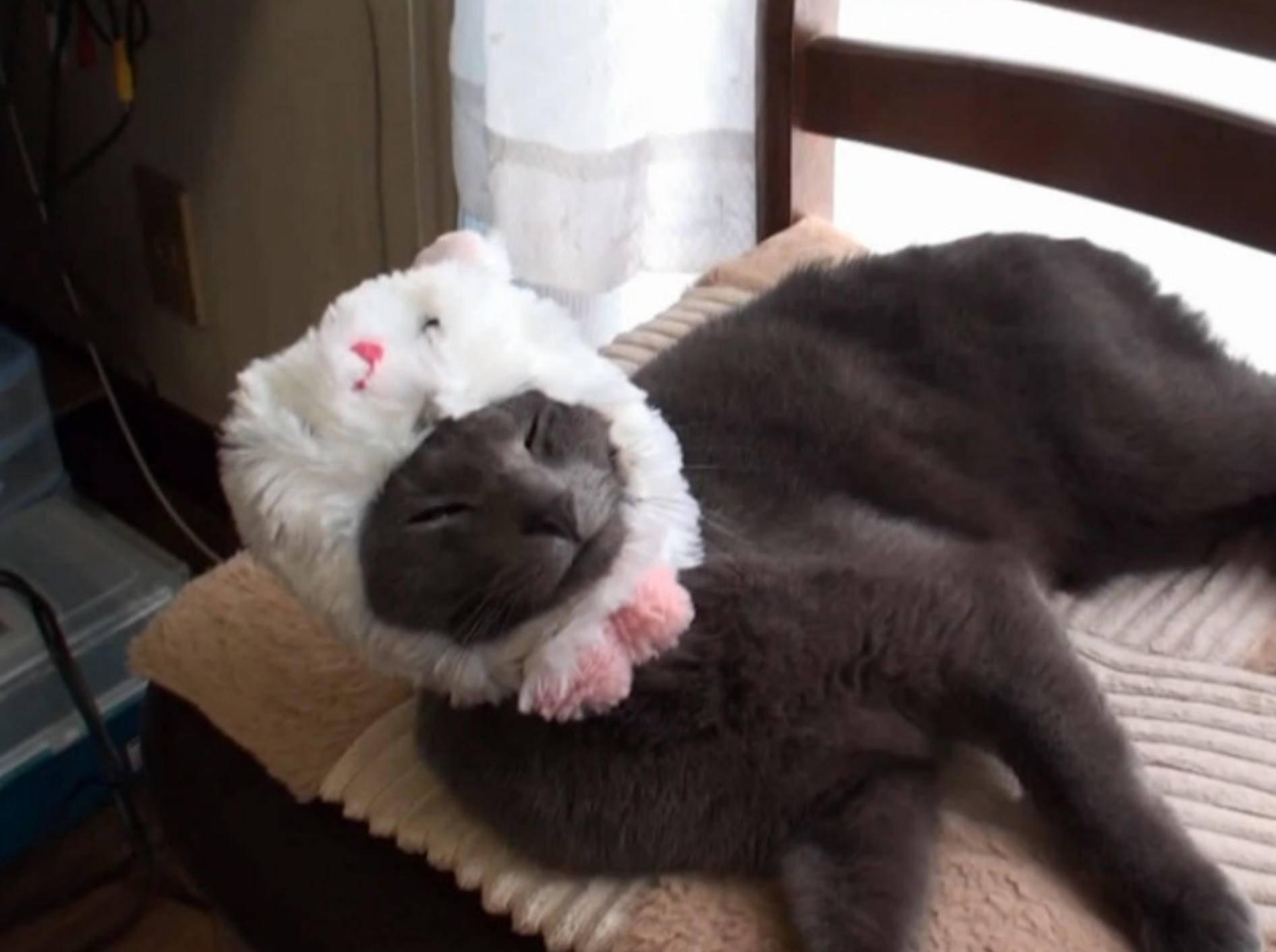 Katze mit Vorliebe für Osterhäschen