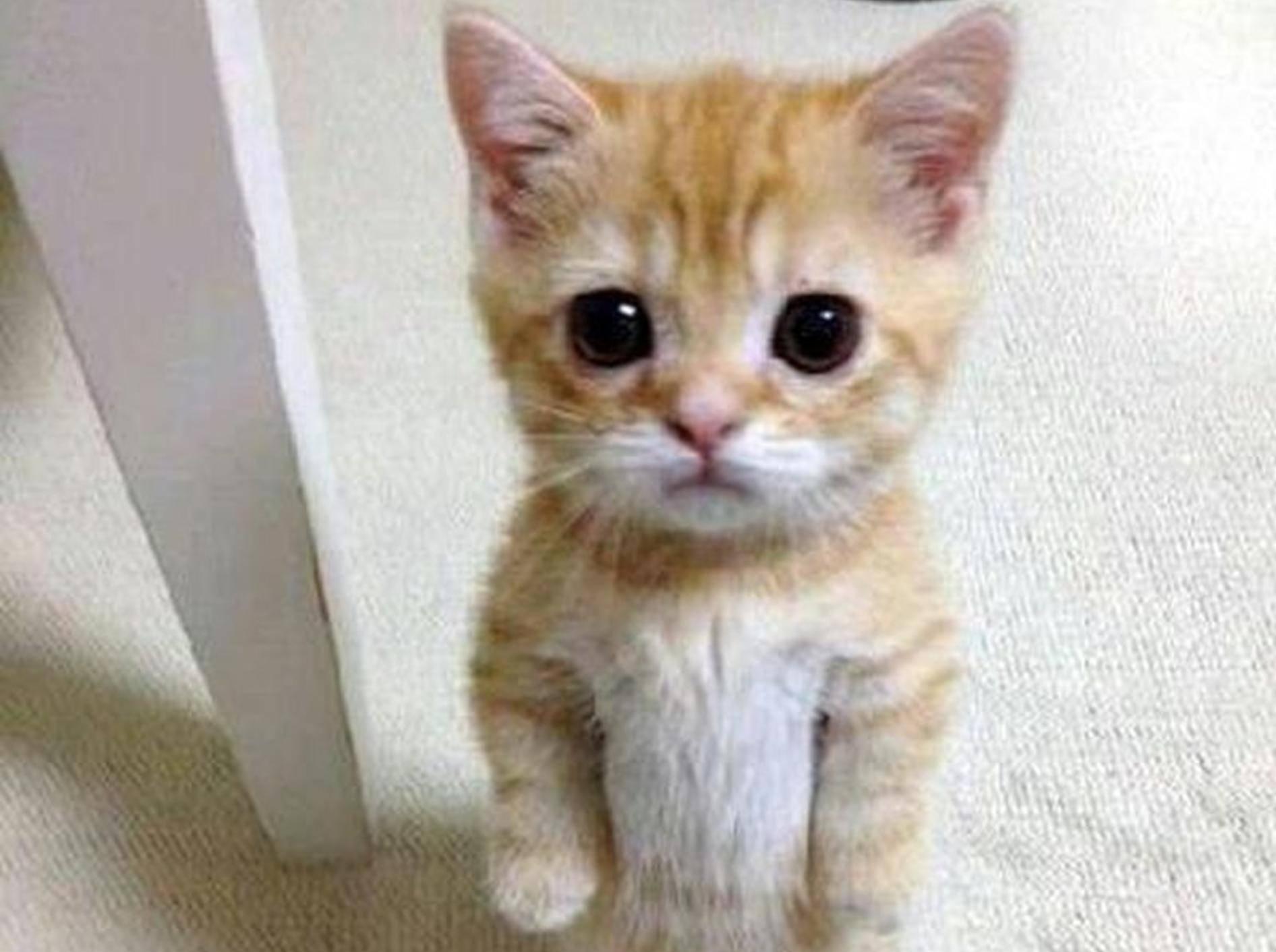 — Facebook / Love Meow