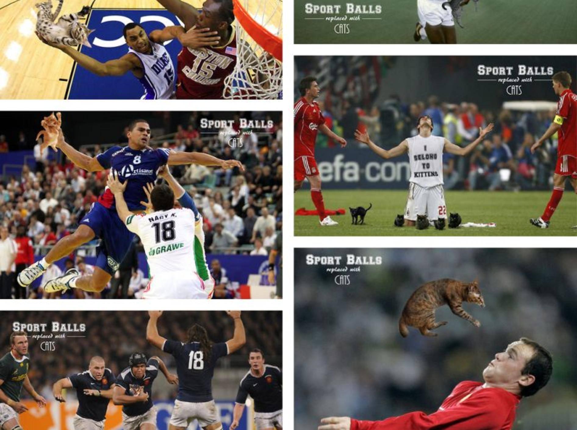 """Makaberer """"Scherz"""": Ballspiel mit Katzen — Bild: 2013 Tumblr / sportballsreplacedwithcats"""