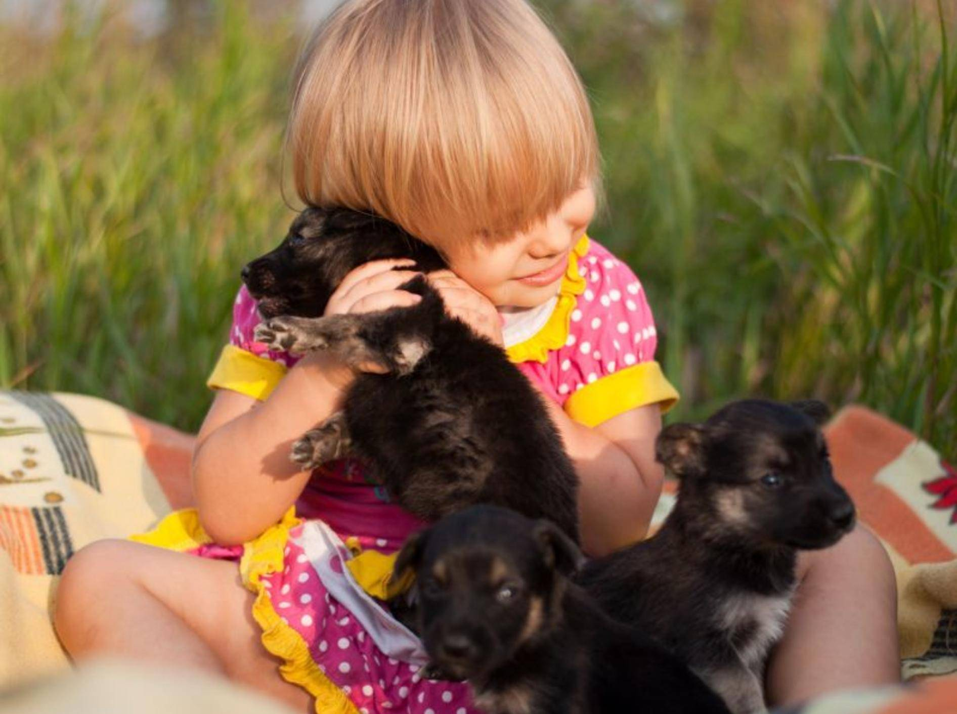 Süße Welpen und ein kleines Mädchen: Beginn einer wunderbaren Freundschaft — Bild: Shutterstock / BestPhotoPlus