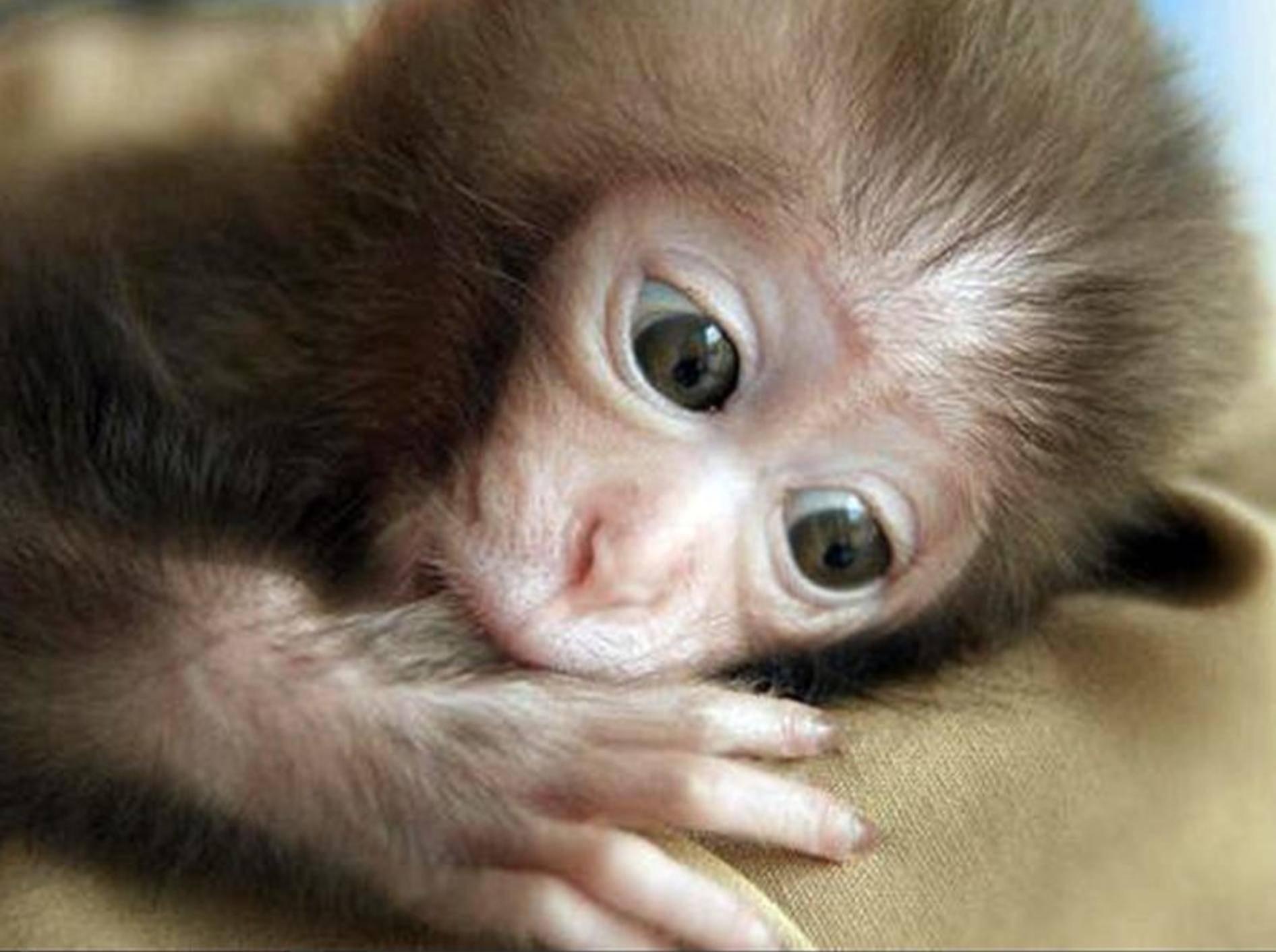 Teenie-Schwarm Justin Bieber: Affe beschlagnahmt