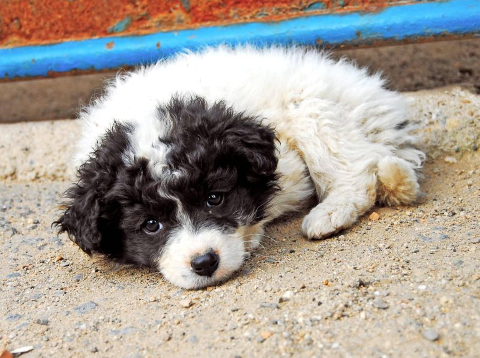 Olympia 2014 in Sotschi: Für streunende Hunde und Katzen das Todesurteil?