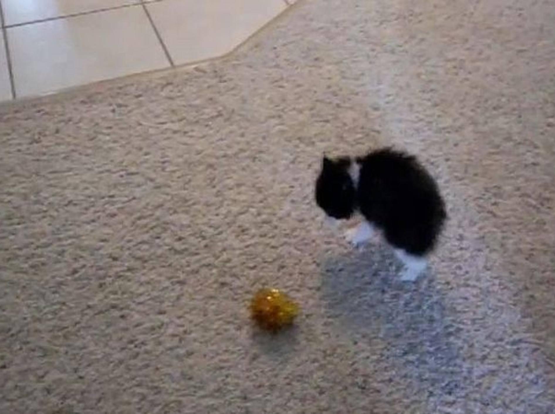 komische-katze-spielt-mit-ball