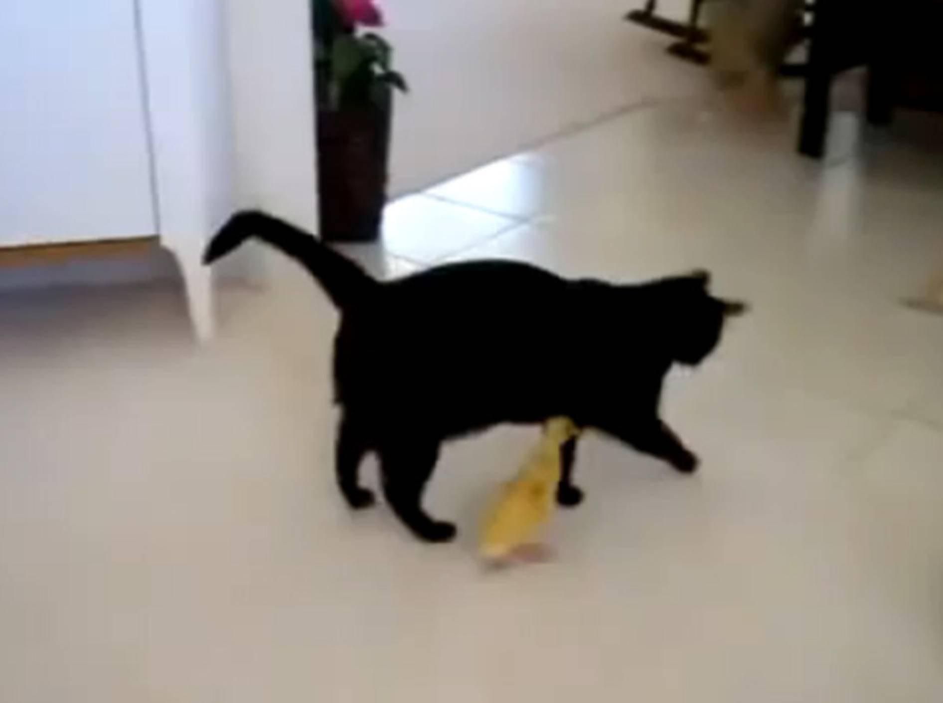 Schwarze Katze wird unverhofft zur Küken-Mama