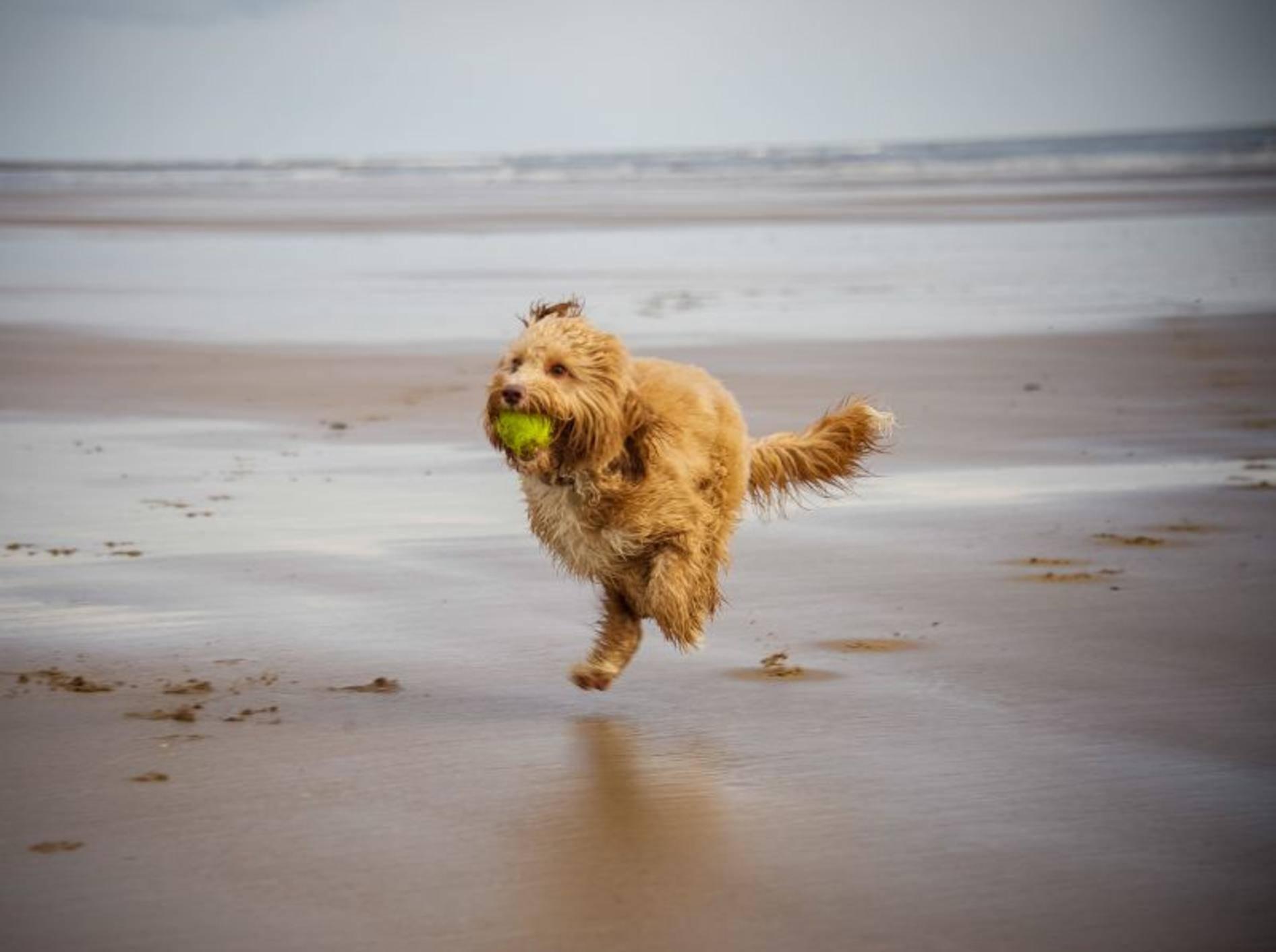 Schöner Hundestrand: Perfekter Spielplatz für Vierbeiner — Bild: Shutterstock / rashworth
