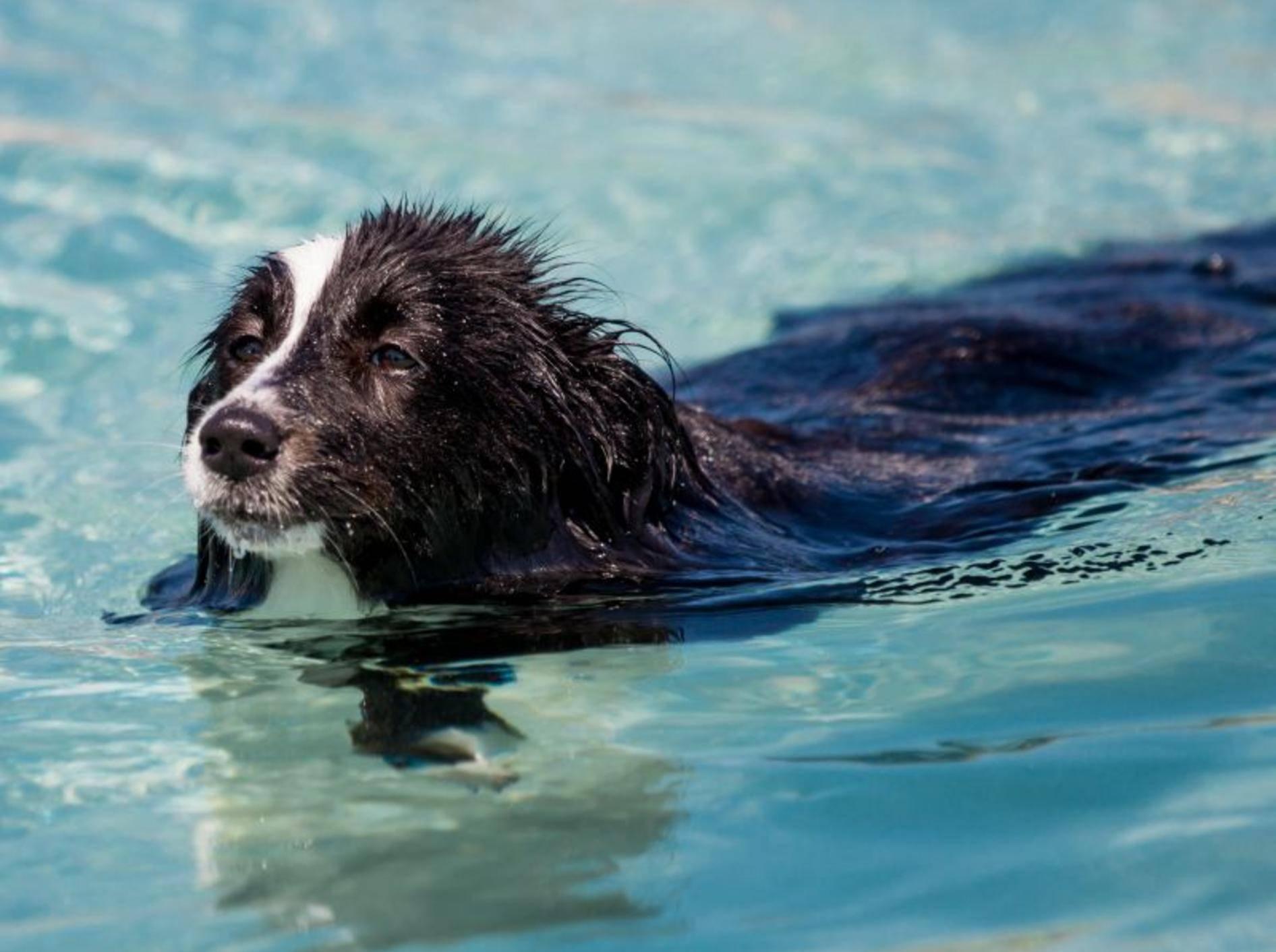 Badespaß im Urlaub mit Hund — Bild: Shutterstock / FeSeven