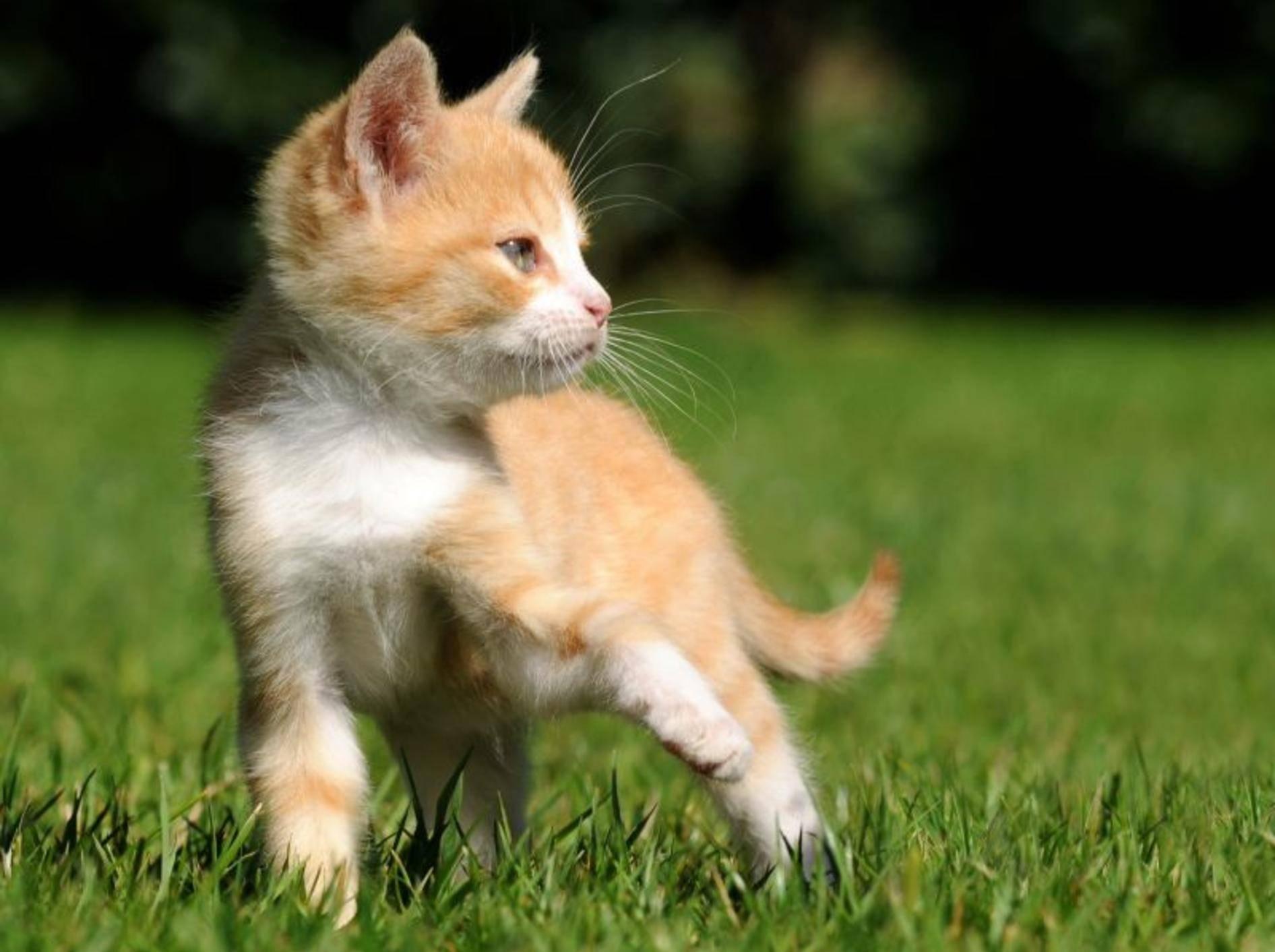 Katze kastrieren lassen: Vor oder nach dem Eintritt der Geschlechtsreife? — Bild: Shutterstock / Schubbel