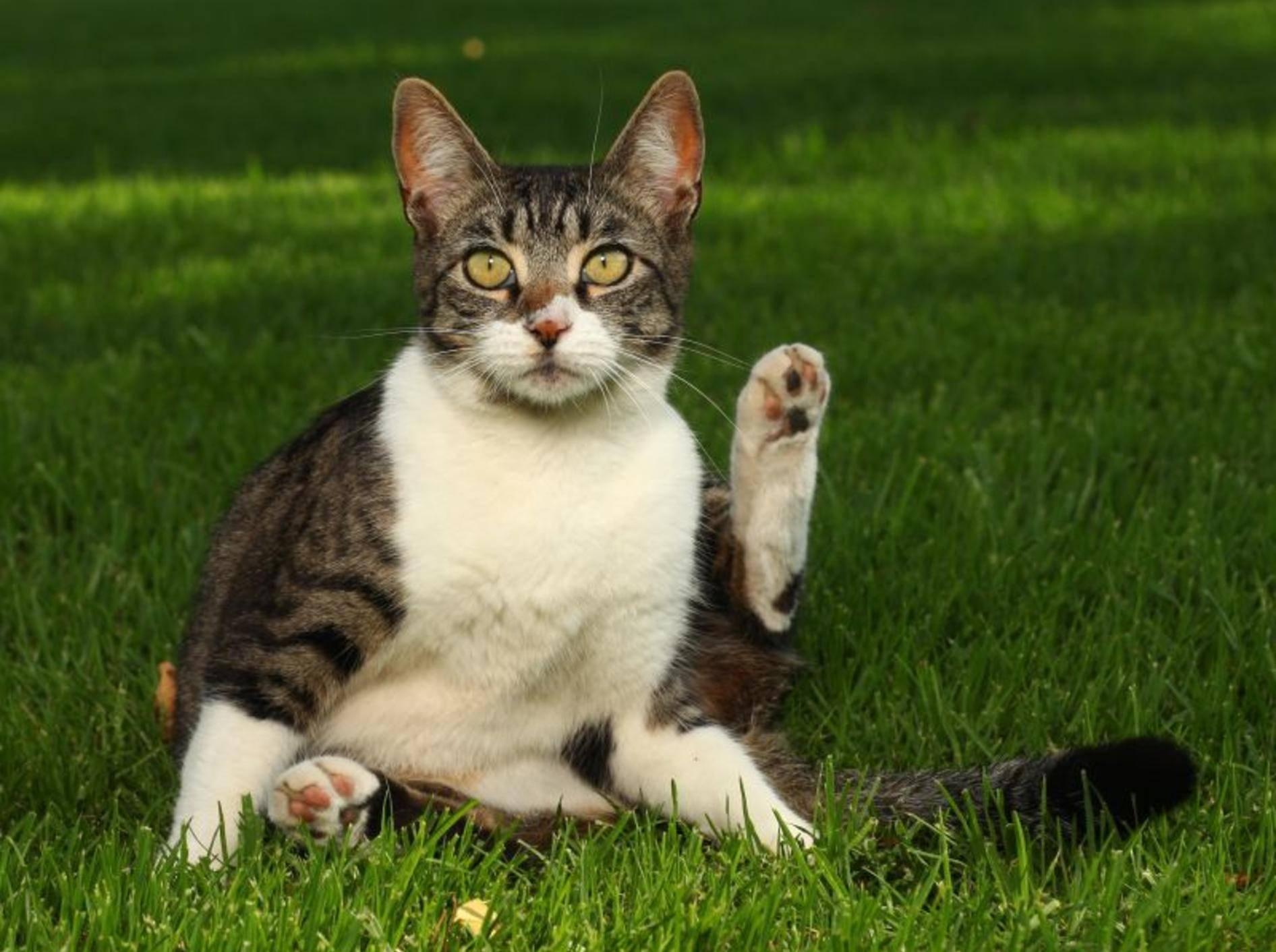 Wurmkur für Katzen: Besonders wichtig bei Freigängern — Bild: Shutterstock / Katrina Brown