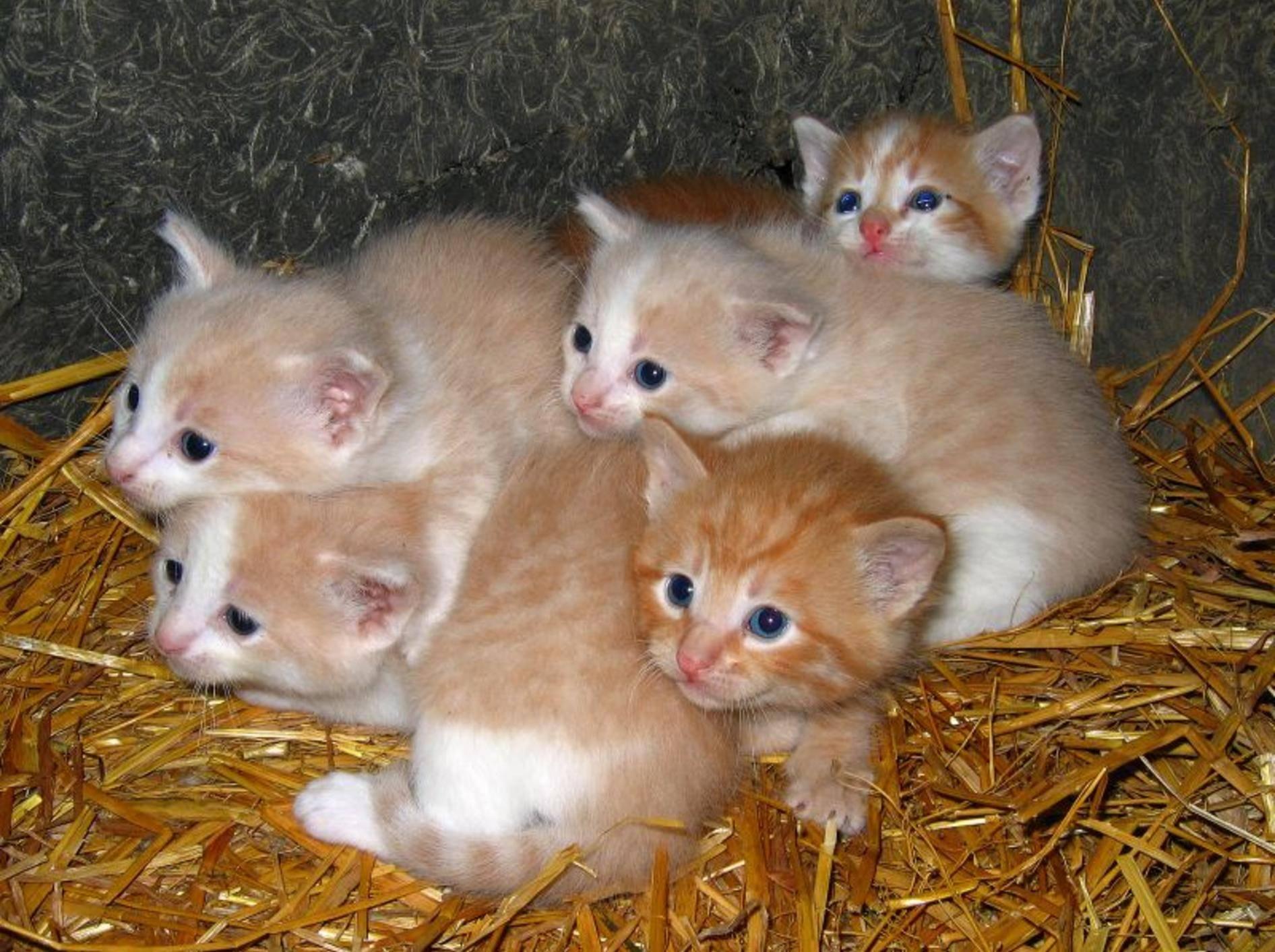 Ursachen für Wurmbefall: Kitten werden häufig schon vor der Geburt infiziert — Bild: Shutterstock / Stephanie Coffman