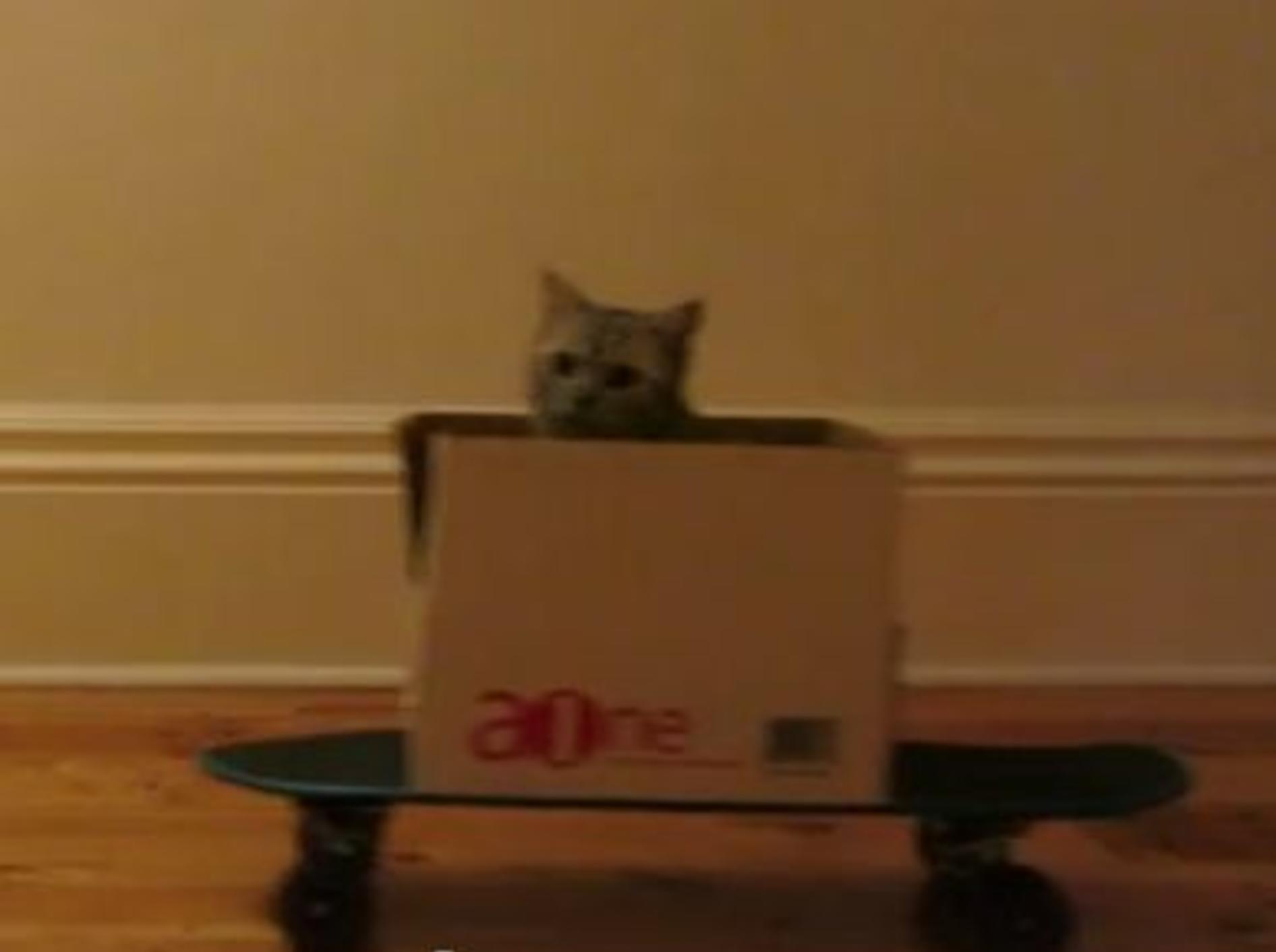 Lustige Katze skatet im Karton — Bild: Youtube / perkyballs