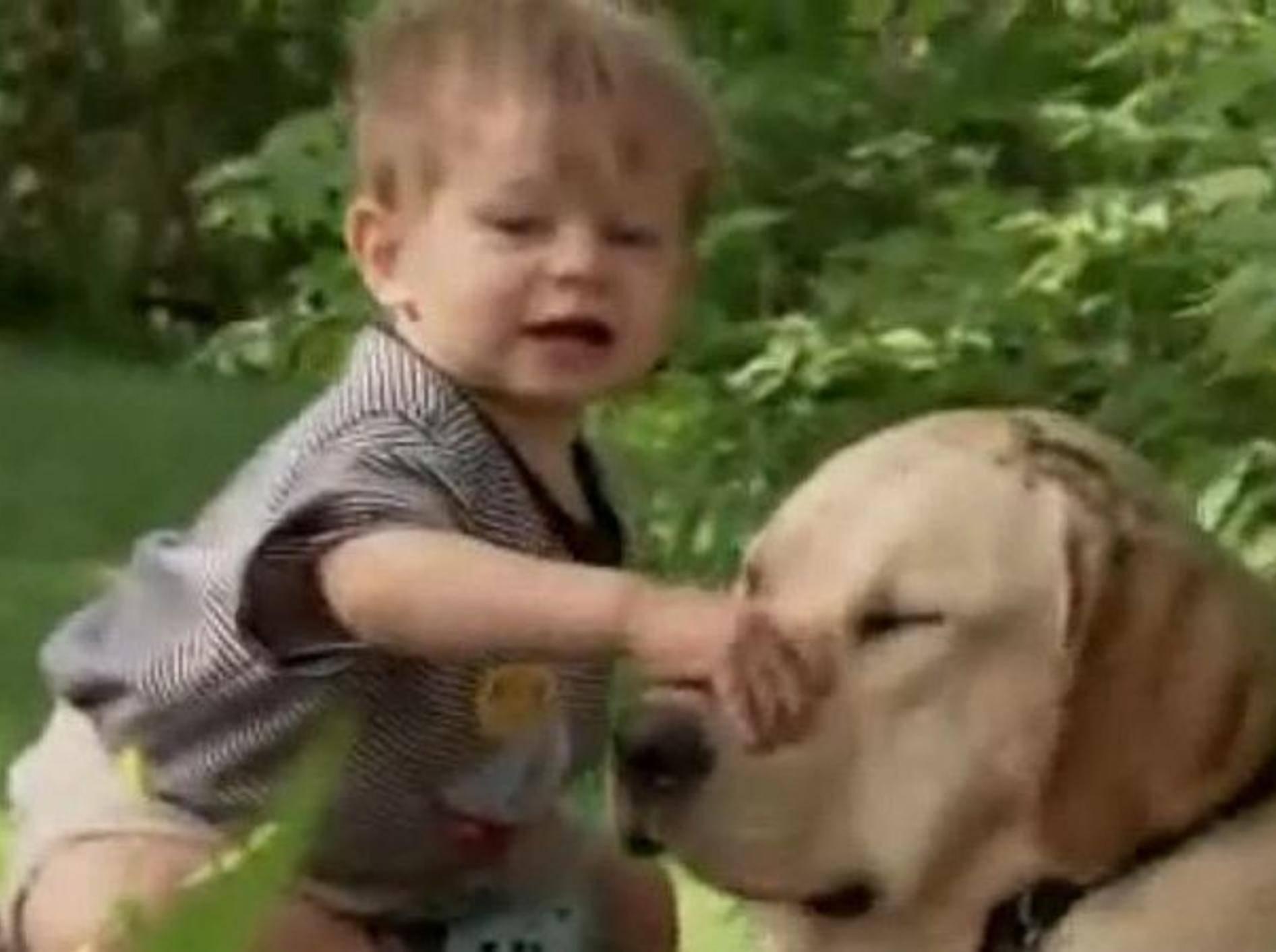 kleiner-junge-spielt-mit-hund