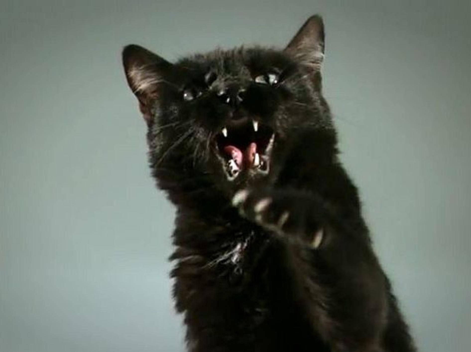 panther-zeitlupe-bilder