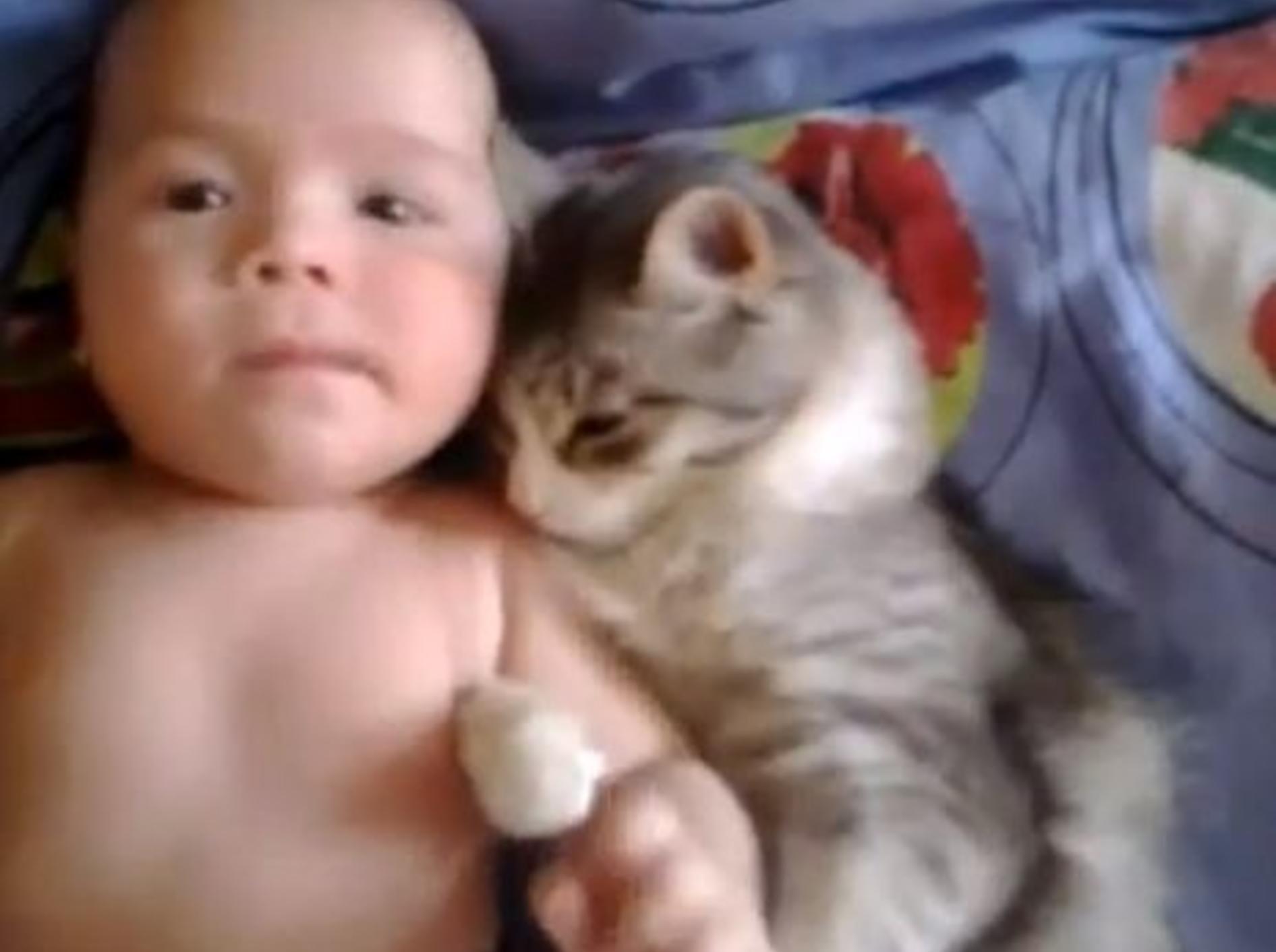 Verschmuste Katze liebt Baby über alles — Bild: Youtube / mihaifrancu