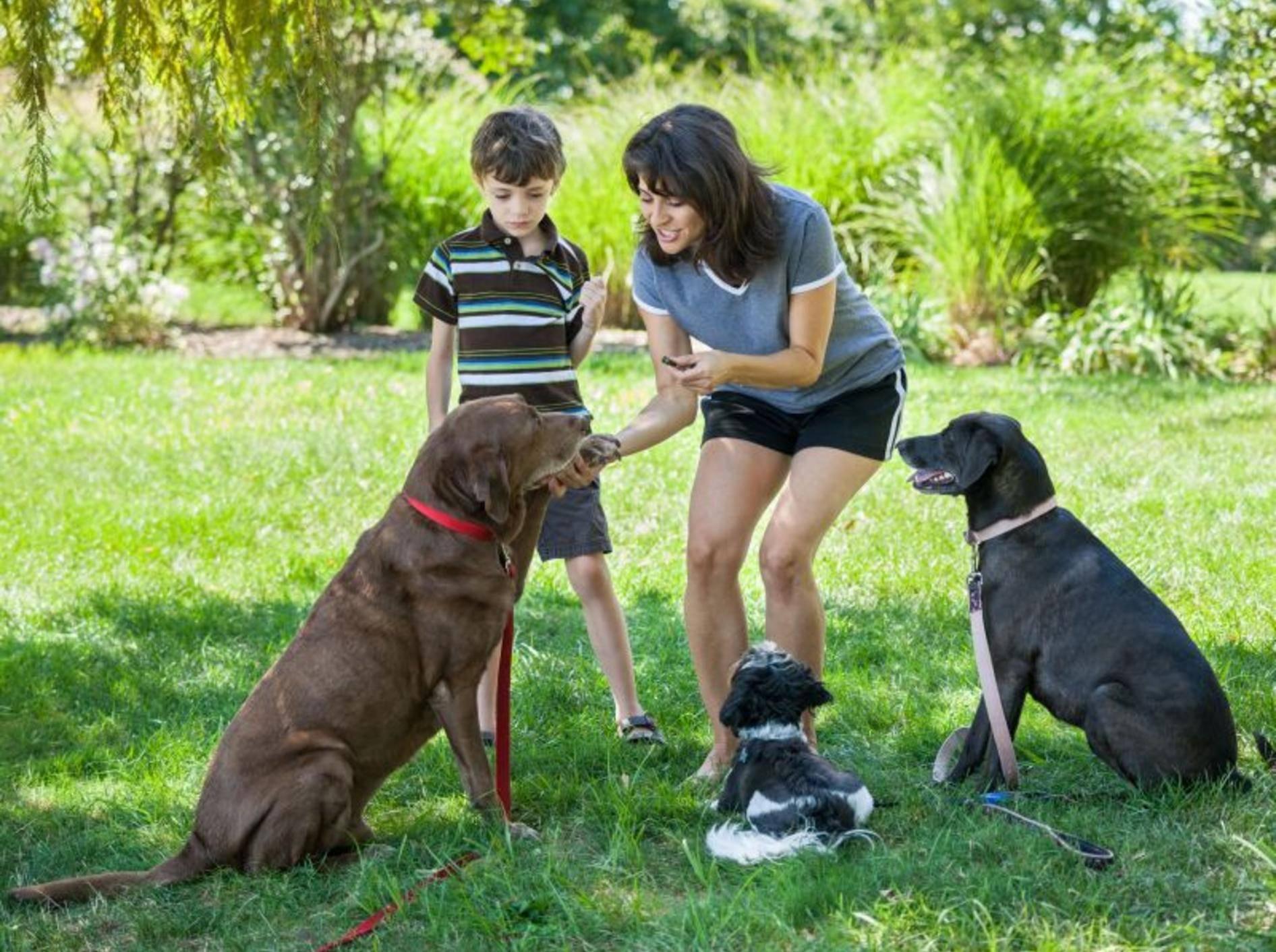 Hundetraining mit Clicker ist ein guter Start für eine harmonische Beziehung — Bild: Shutterstock / eurobanks