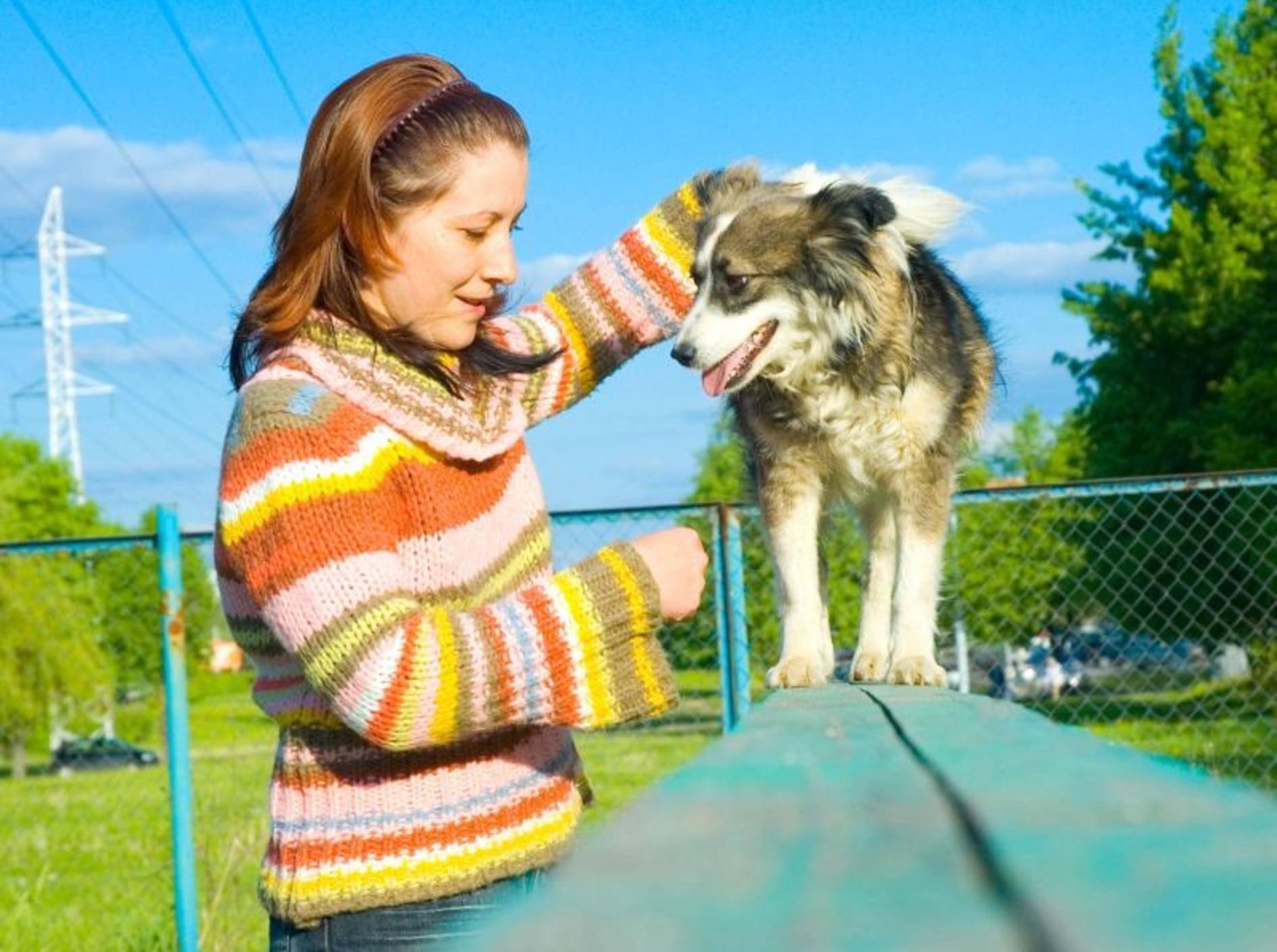Das richtige Timing ist wichtig beim Clickertraining mit dem Hund — Bild: Shutterstock / siamionau pavel