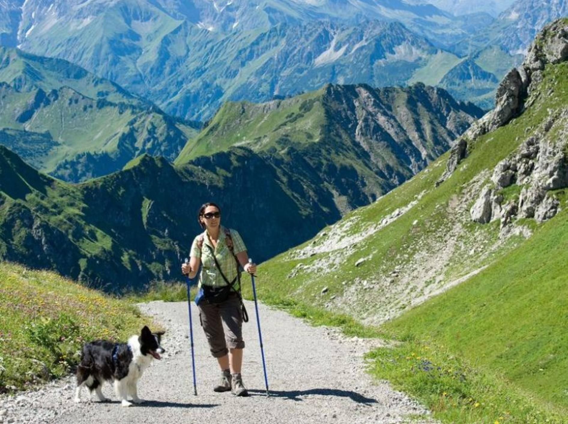 Hund-Herrchen-Berge-Strasse-Hundehaftpflicht-Deutschland