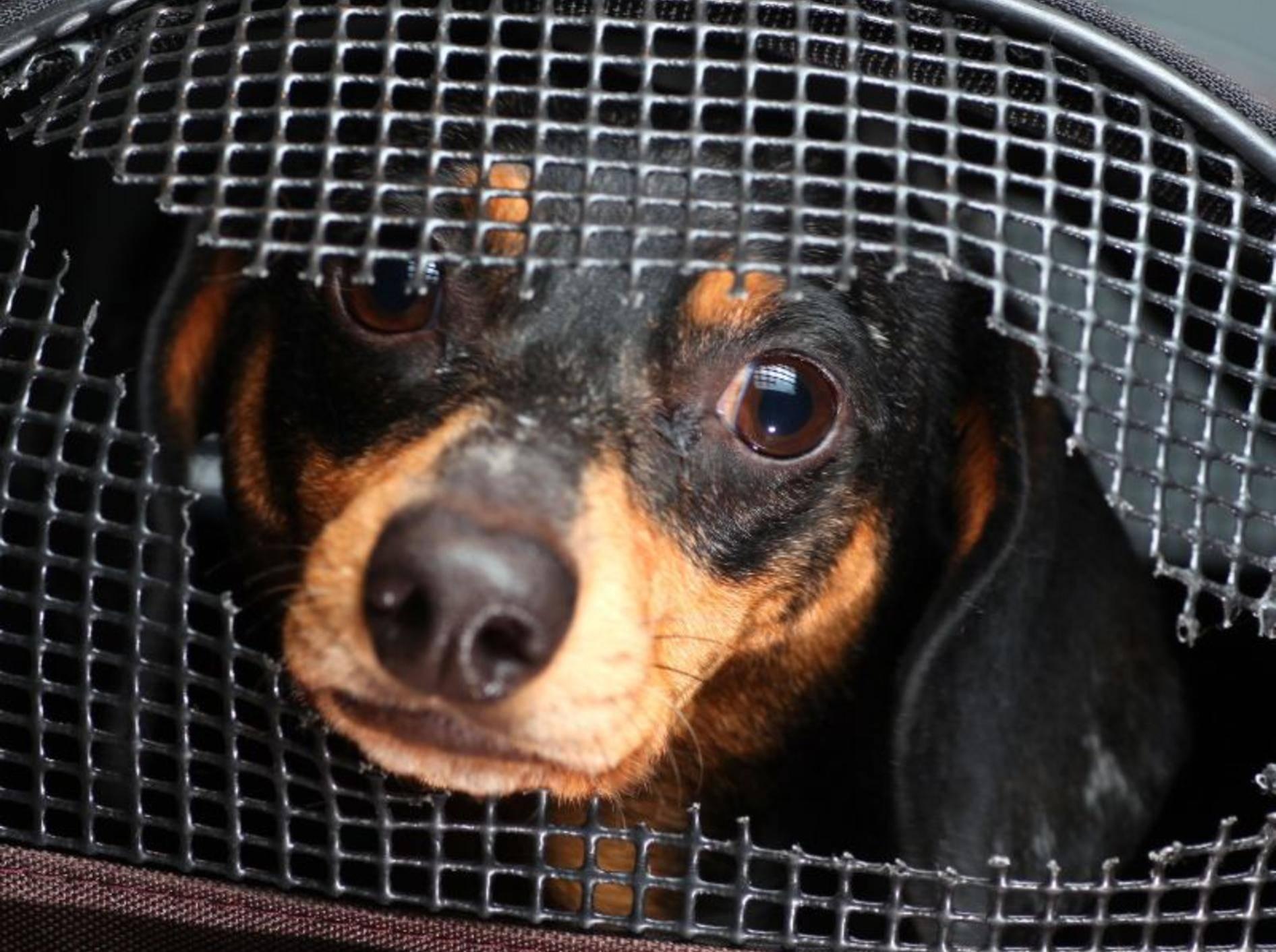 Was müssen Hundehalter beim Abschließen einer Hundehaftpflicht beachten? — Bild: Shutterstock / a katz