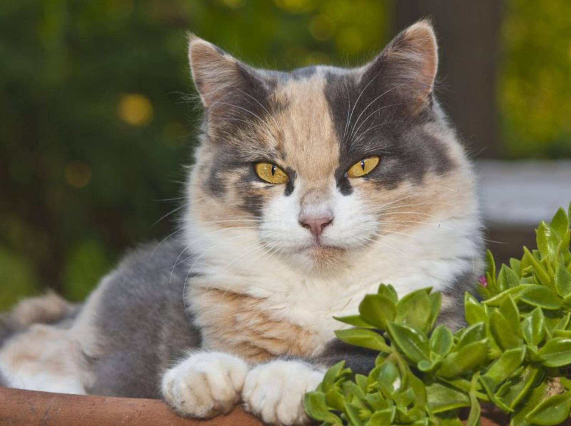 Ungiftige Balkonpflanzen für Katzen gibt es im Zoofachgeschäft und in der Gärtnerei – Shutterstock / J. McPhail