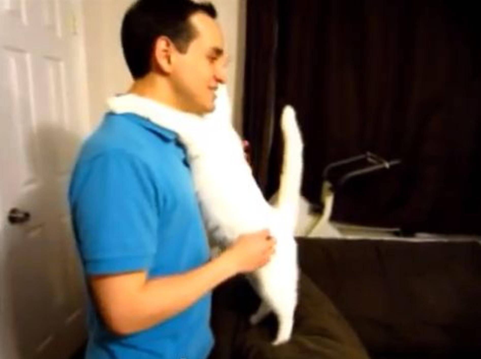 Liebe Katze umarmt ihren Besitzer — Bild: Youtube / mnmblink