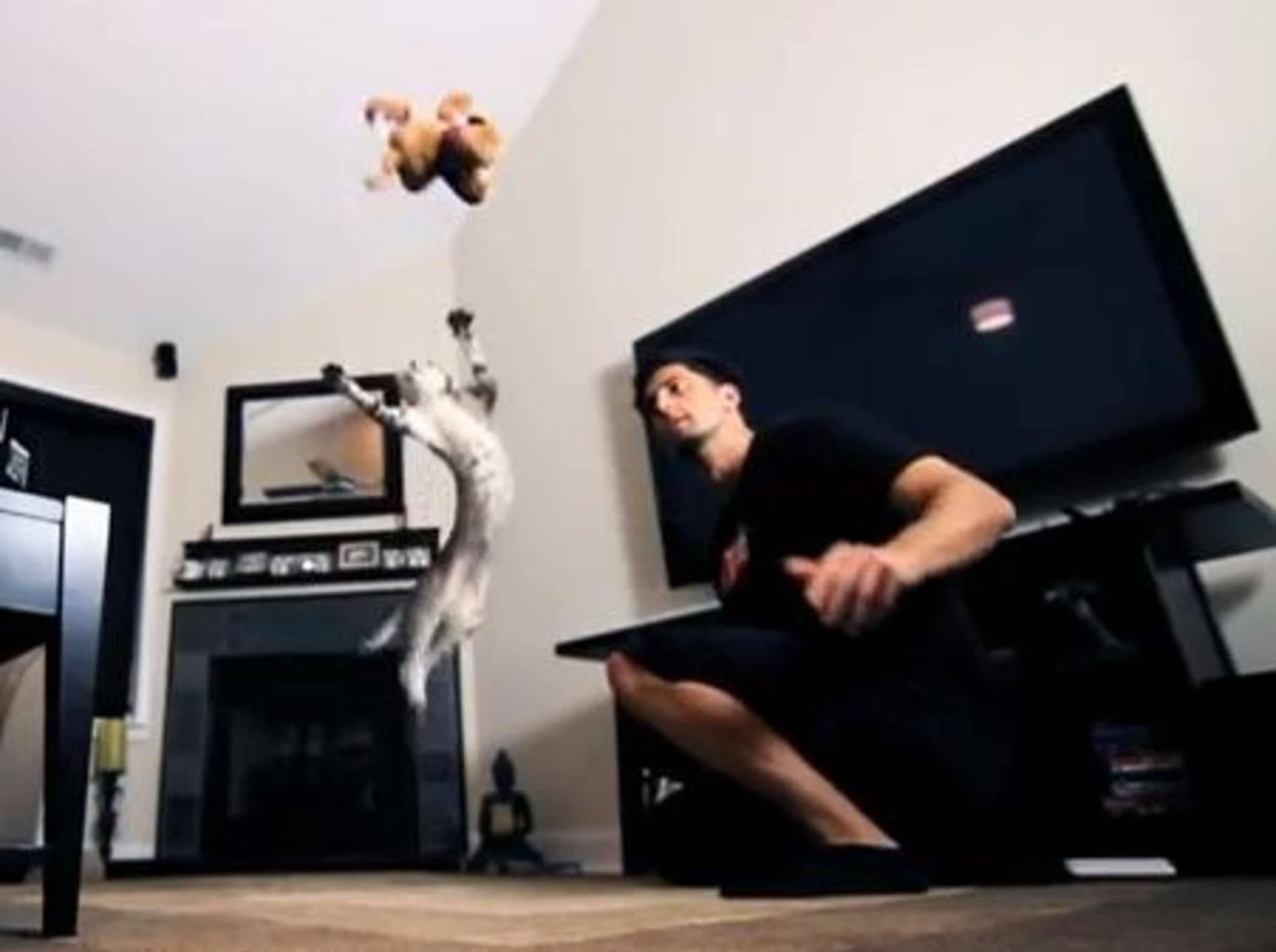 Nylah vs. Bambu: Tolle Katzen im Sprung-Duell — Bild: Youtube / NylahKitty
