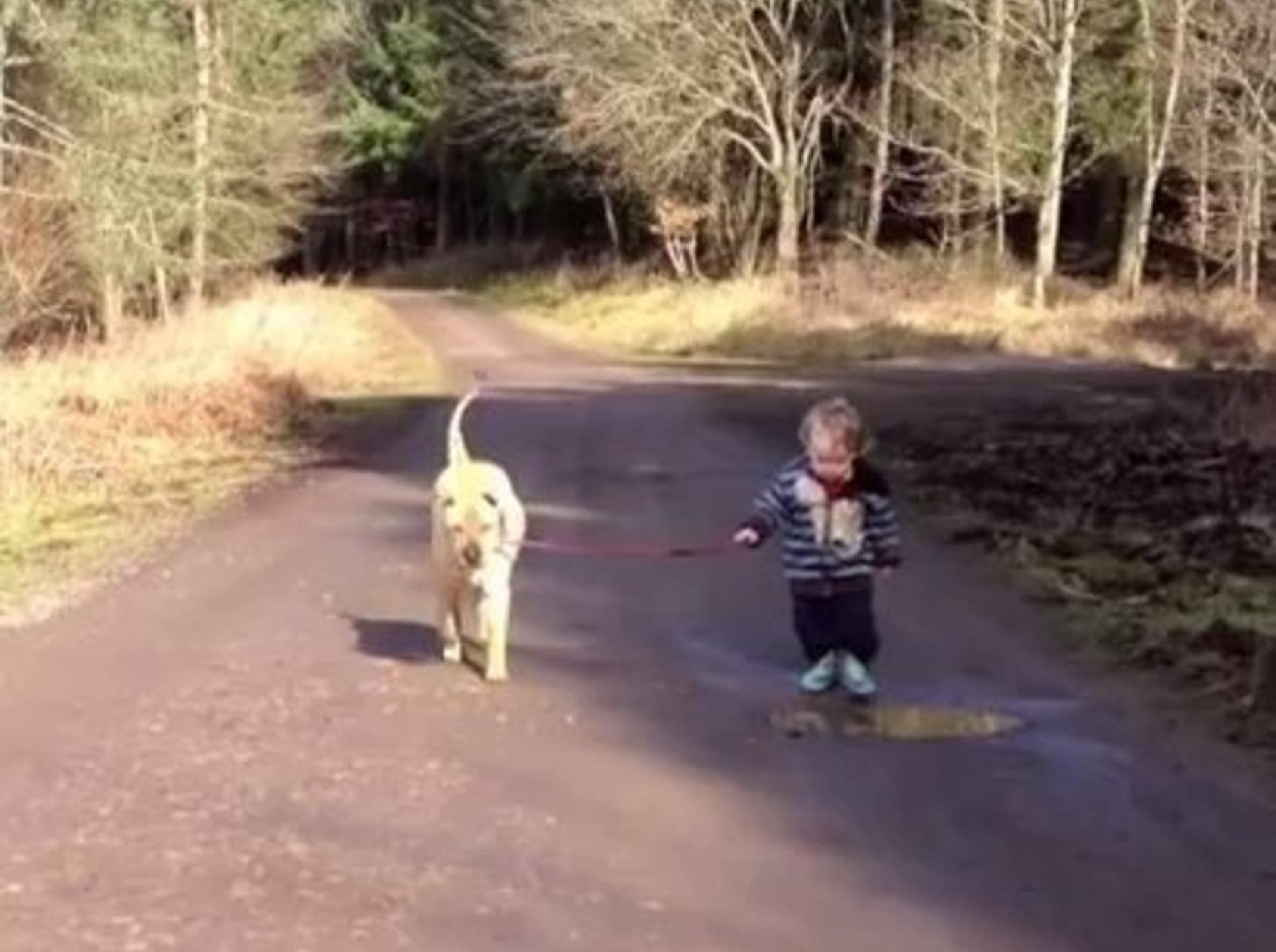 Kleines Kind, geduldiger Hund: Beste Freunde der Welt? — Bild: Youtube / Julian Burrett