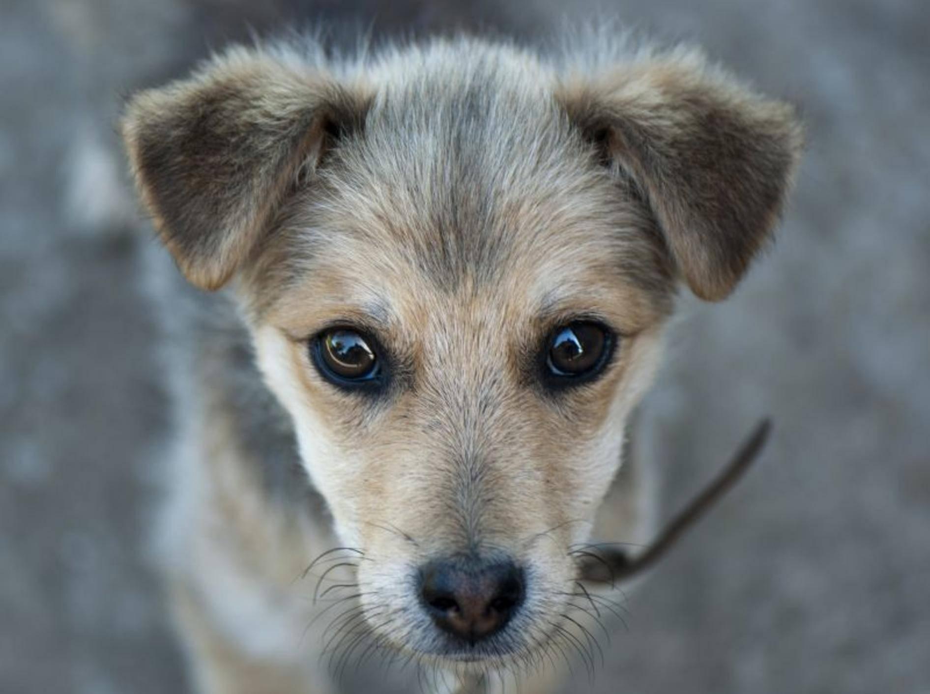 Hunde aus Spanien zu adoptieren erfordert Zeit, Geduld und Einfühlungsvermögen — Bild: Shutterstock / Deviant