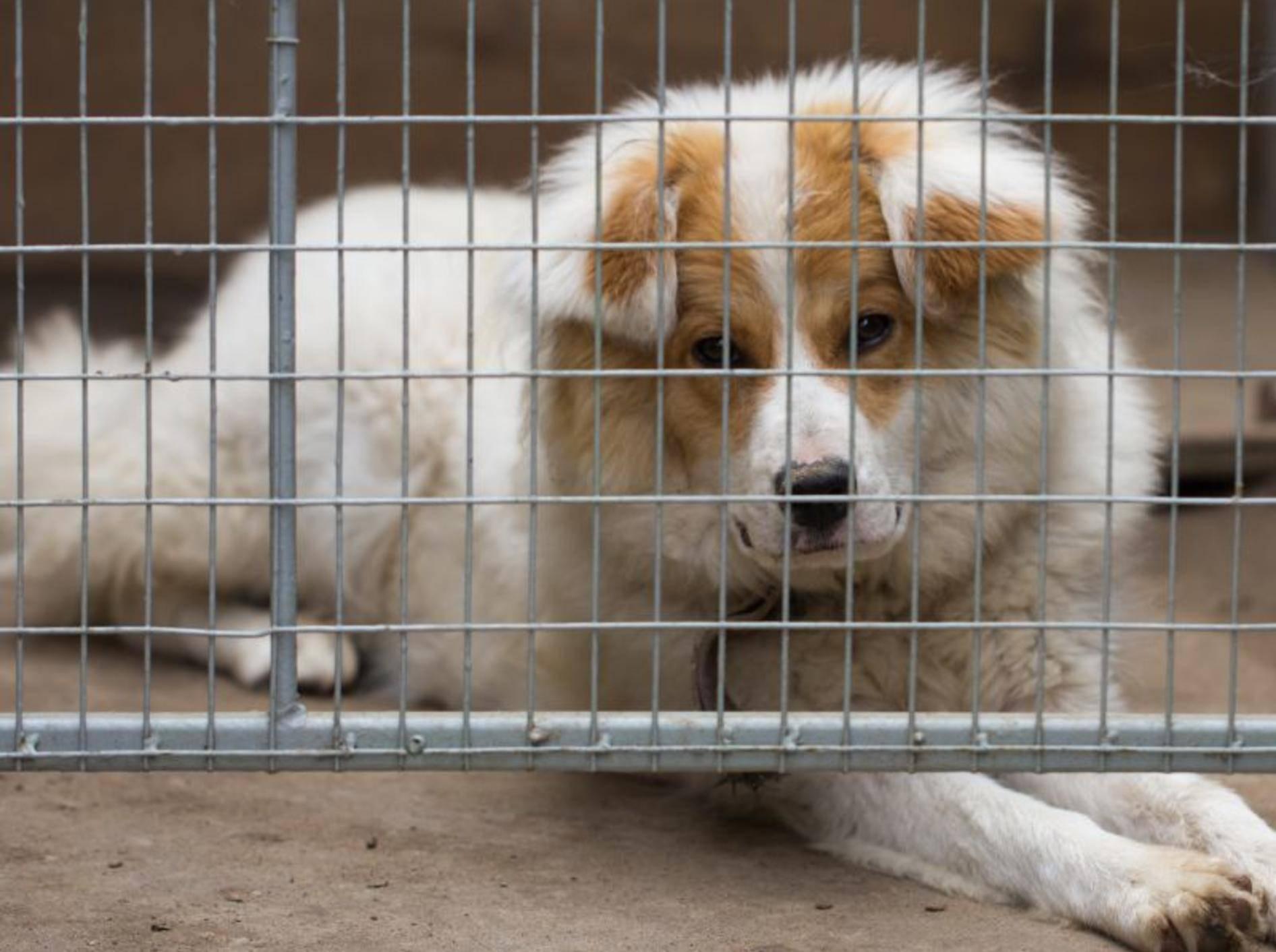 Hunde aus Spanien retten: Hilfe für Tiere in Not — Bild: Shutterstock / schankz