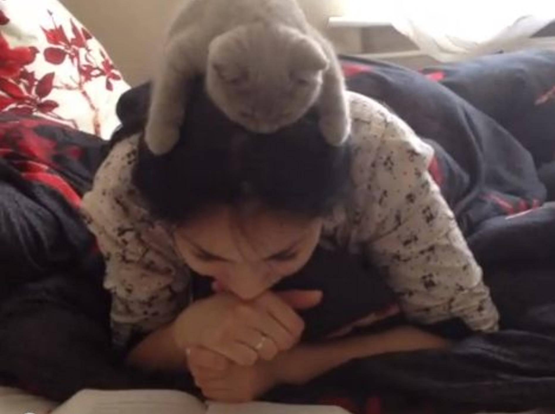 Süße Katze liest mit Besitzerin ein Buch — Bild: Youtube / SeregaOSV