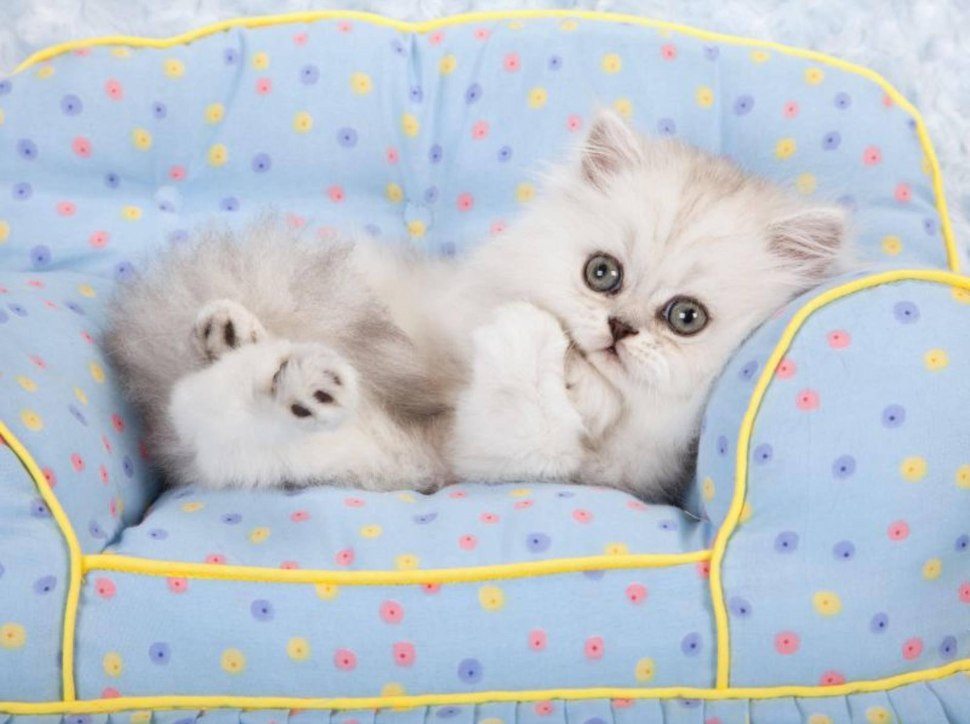 Katzen erfolgreich erziehen erfordert Geduld und Konsequenz — Bild: Shutterstock / Linn Currie