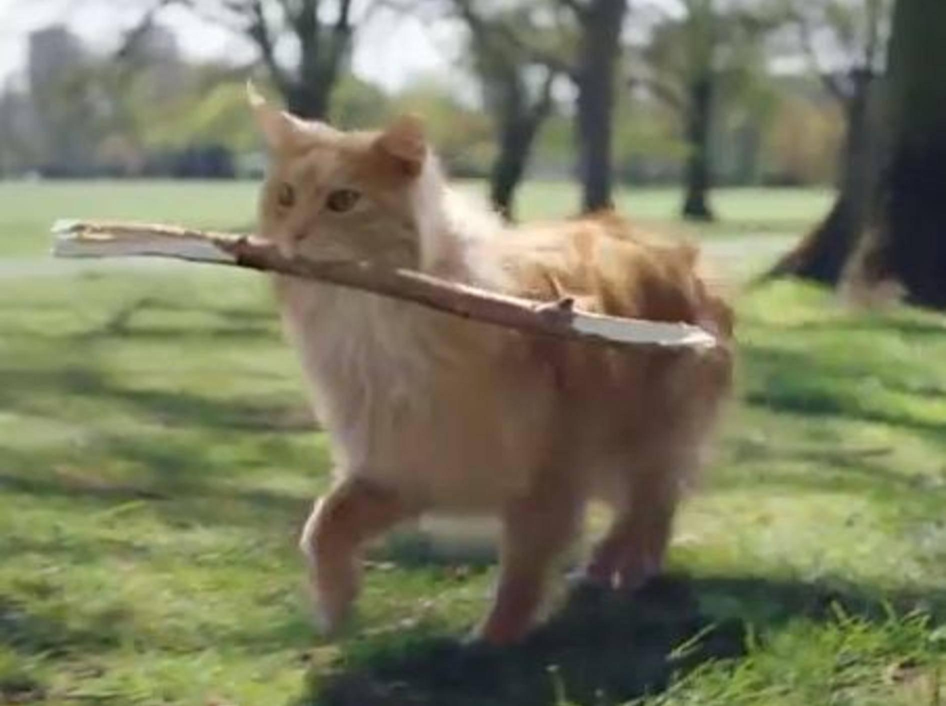 Kleiner Tipp an Katzen: Seid doch mal ein bisschen Hund! — Bild: Youtube / Jason Stone