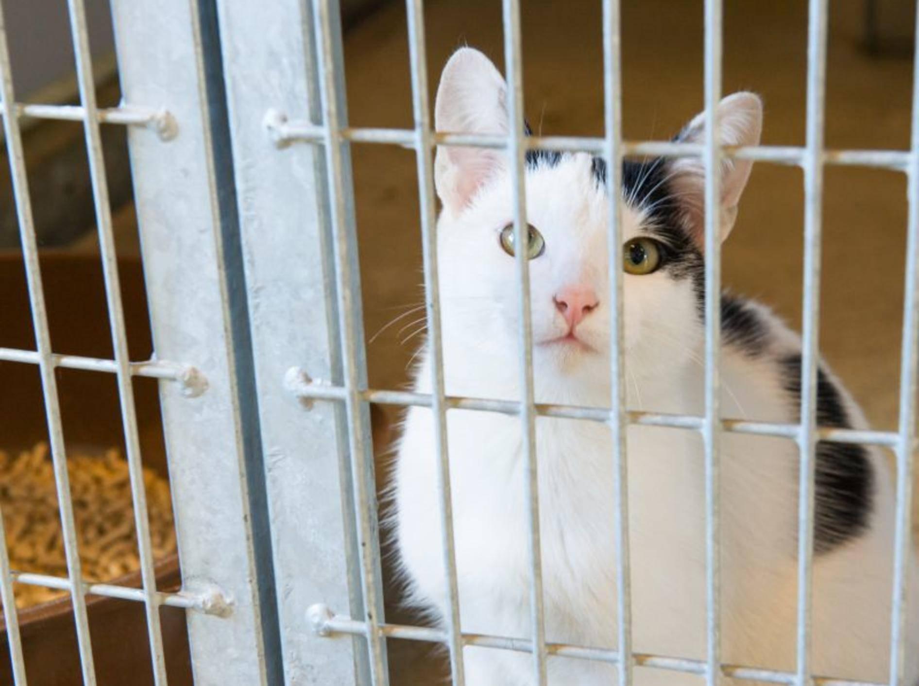 Tiervermittlung online: Rat und Tat über das Internet — Bild: Shutterstock / Ivonne Wierink