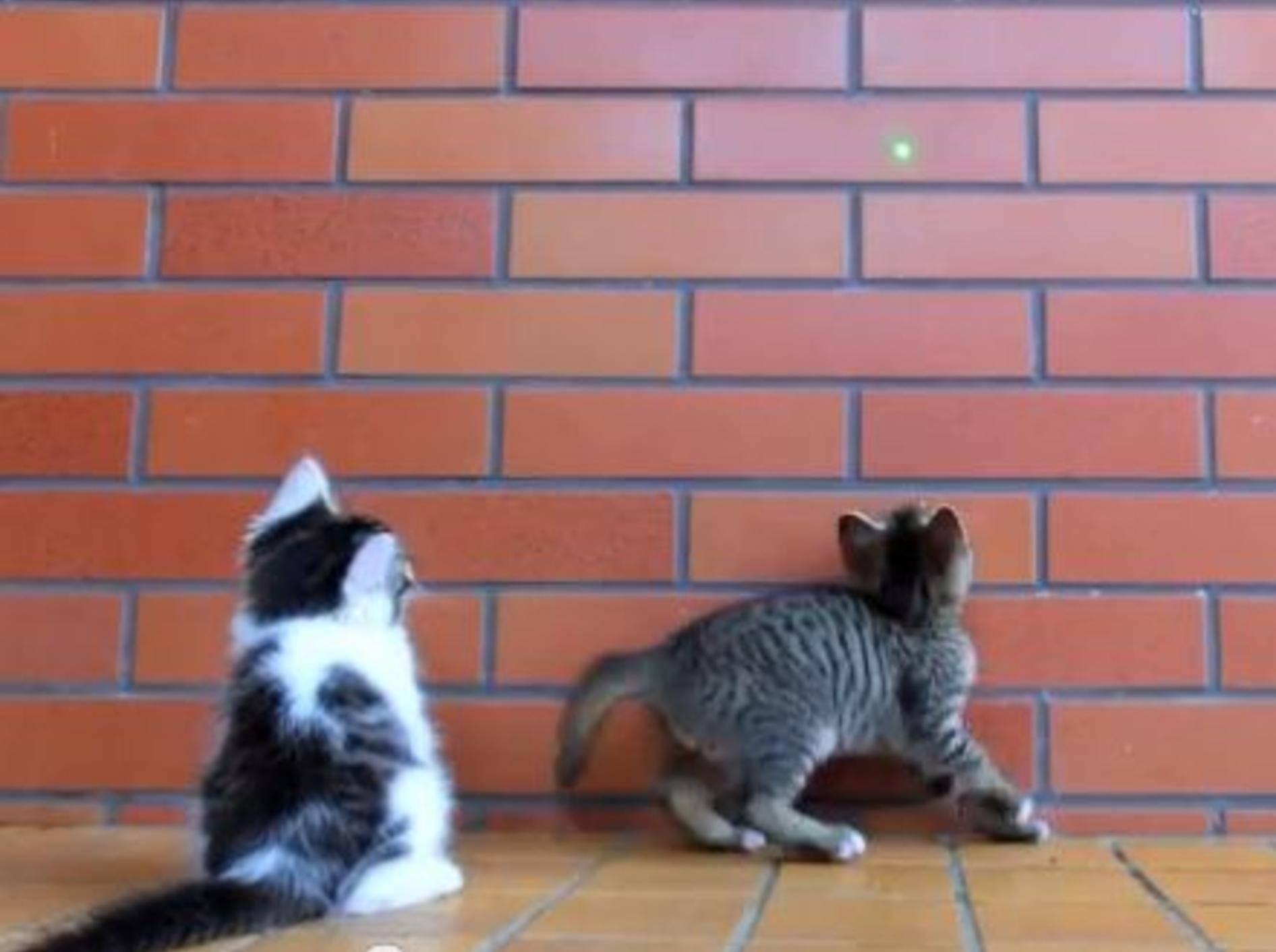 Lustiges Katzenbaby: He, lass mich mitspielen! — Bild: Youtube / SKYtomo