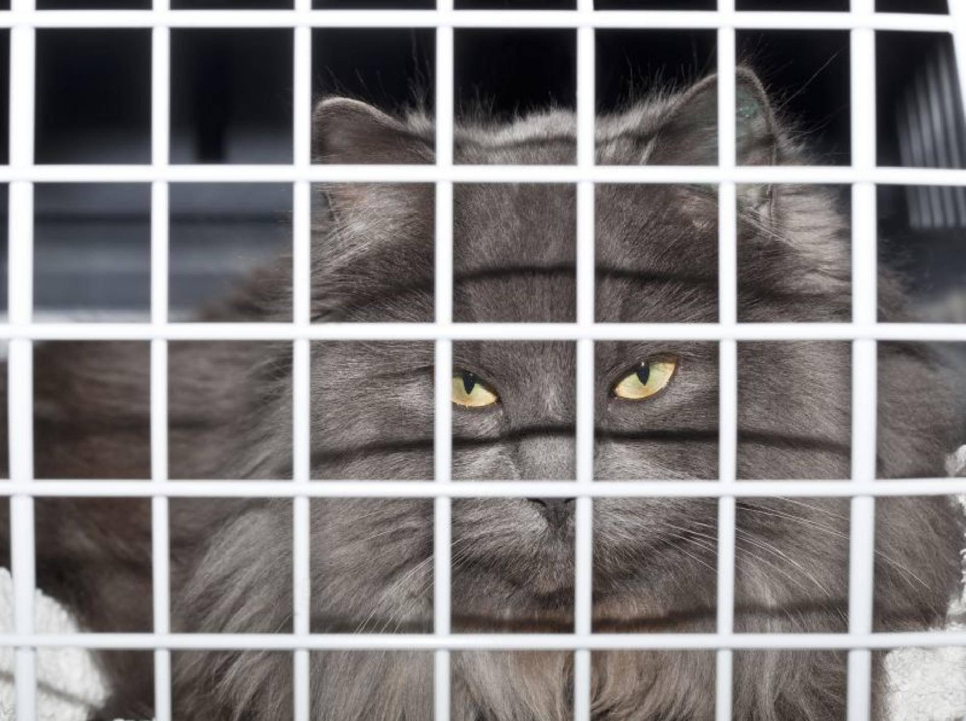 Gestalten Sie Ihrer Katze den Aufenthalt in der Transportbox so angenehm wie möglich — Bild: Shutterstock / Henrik Larsson