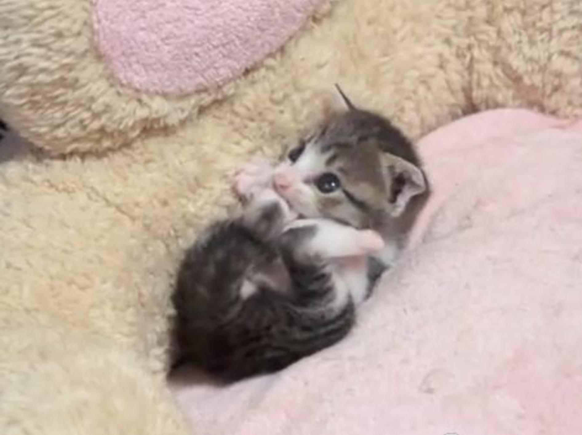 So süß: Ein Minikätzchen macht Katzenwäsche — Bild: Youtube / MAKO0MAKO0