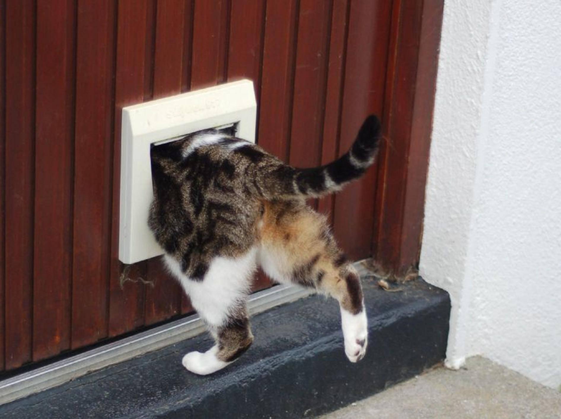 Katzenklappe — Bild: (CC): Flickr / Stephenhanafin