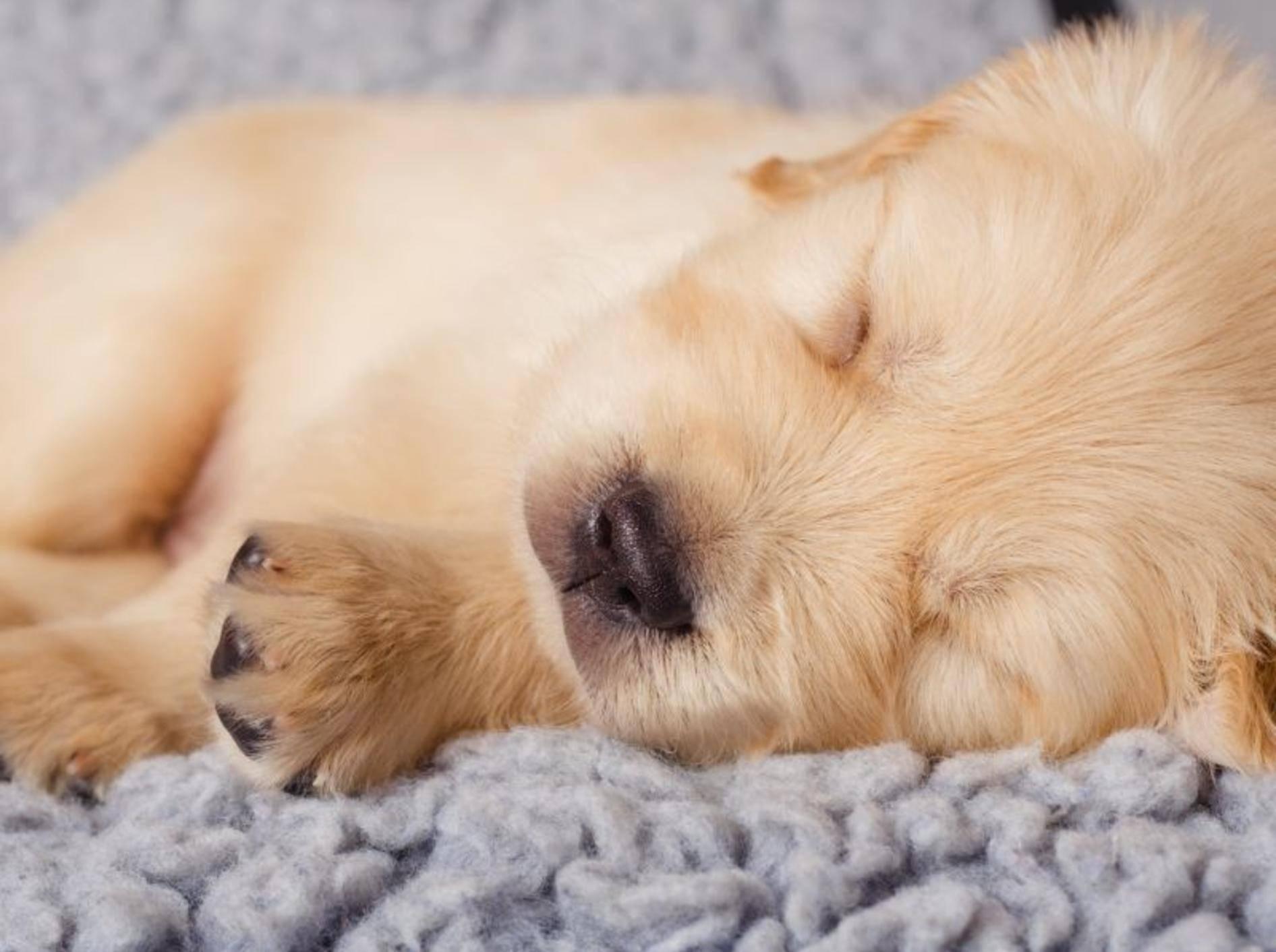 Tierisch schön: Die zehn süßesten Schlafmützen der Welt — Bild: Shutterstock / YuliaPodlesnova