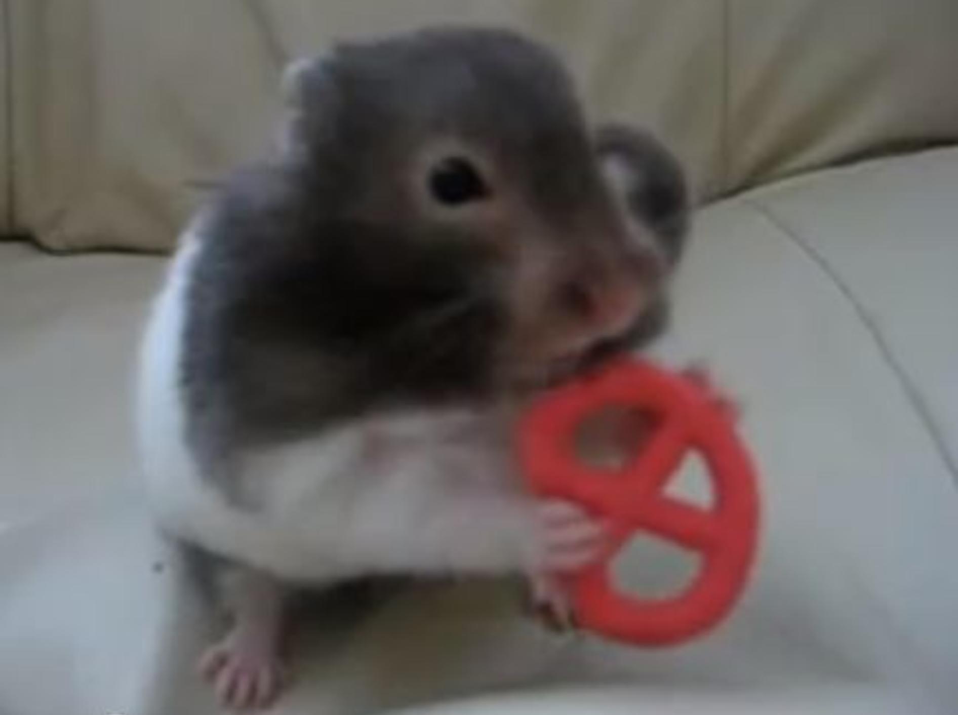 Oh lecker! Süßer Mini-Hamster futtert Brezel — Bild: Youtube / bluecherrygirl101
