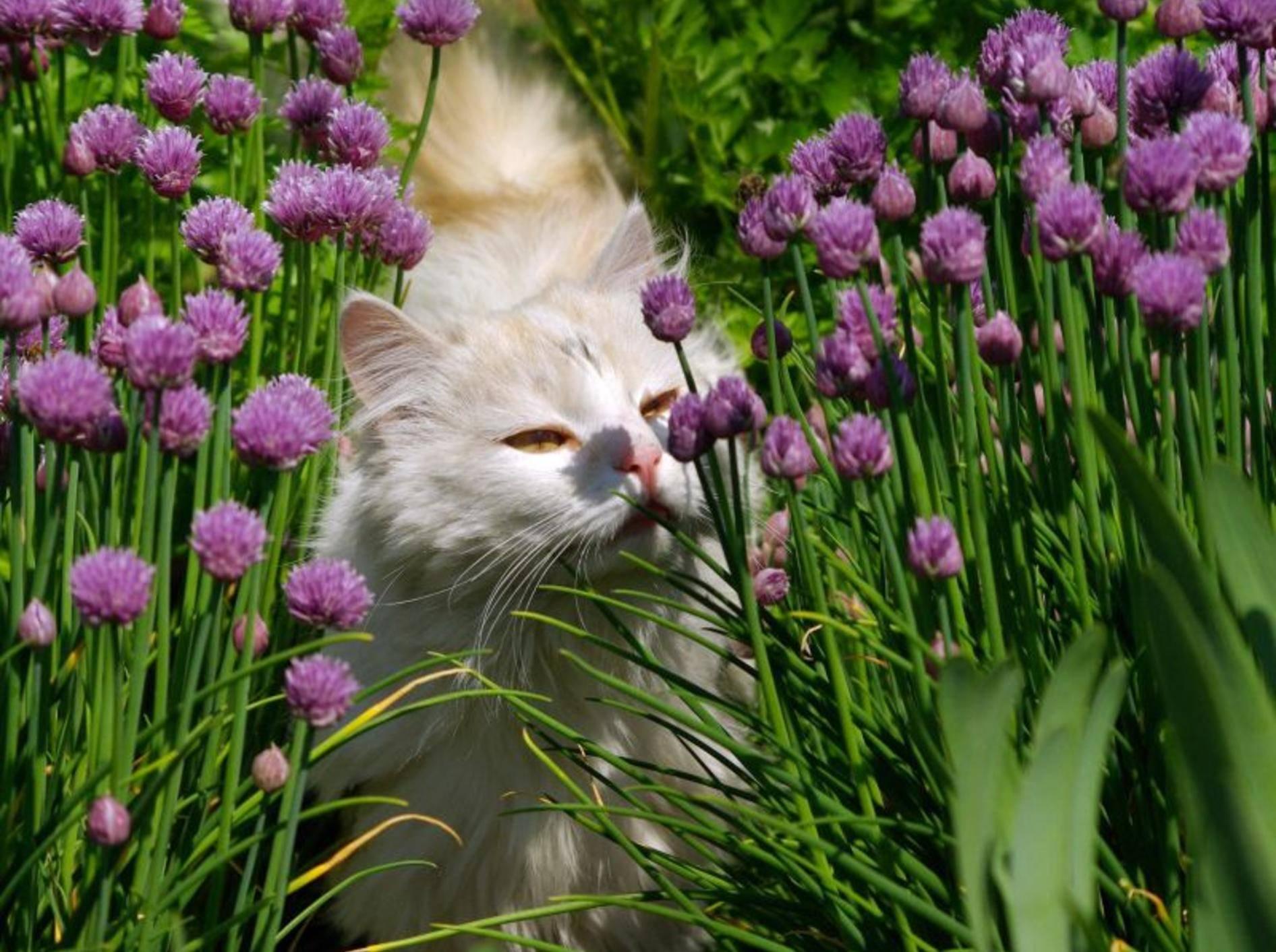 Tipps zur Katzenerziehung: Hilfe durch Aromastoffe — Bild: Shutterstock / Artistas