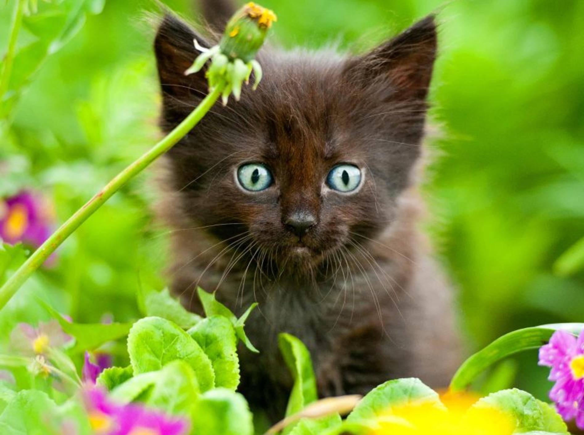 Bachblüten für Katzen: Die Anwendung ist einfach — Bild: Shutterstock / Rita Kochmarjova