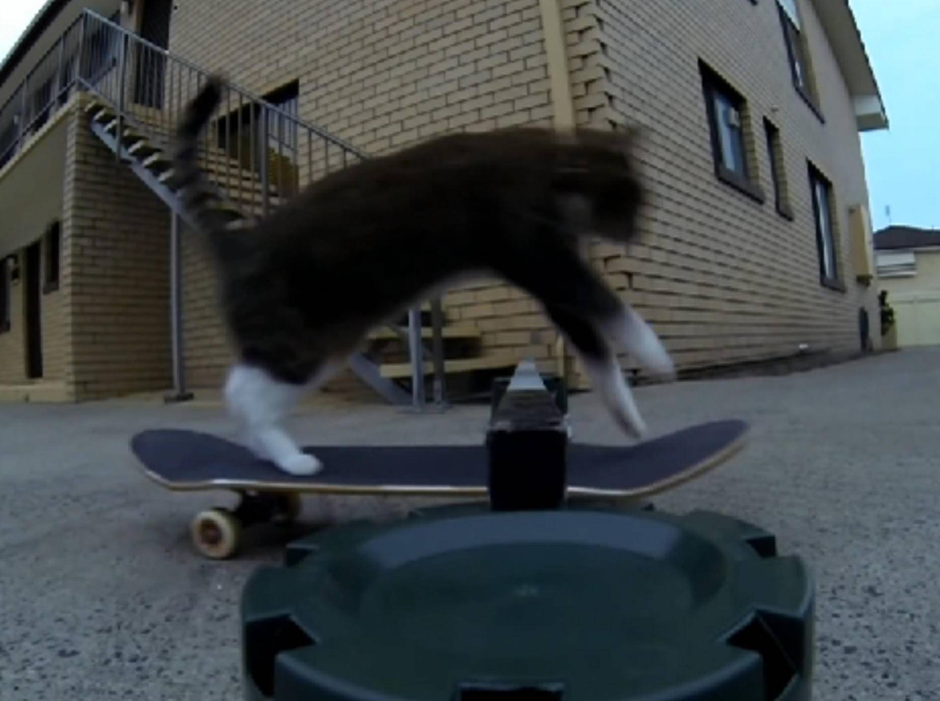 Katze macht Skateboard-Stunt
