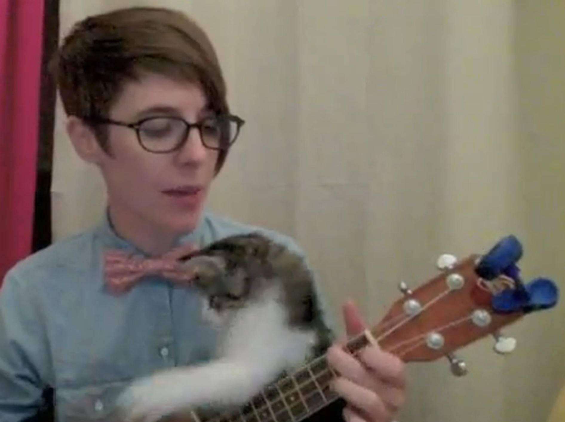 Süßes Kätzchen versucht sich mit Frauchen an der Ukulele