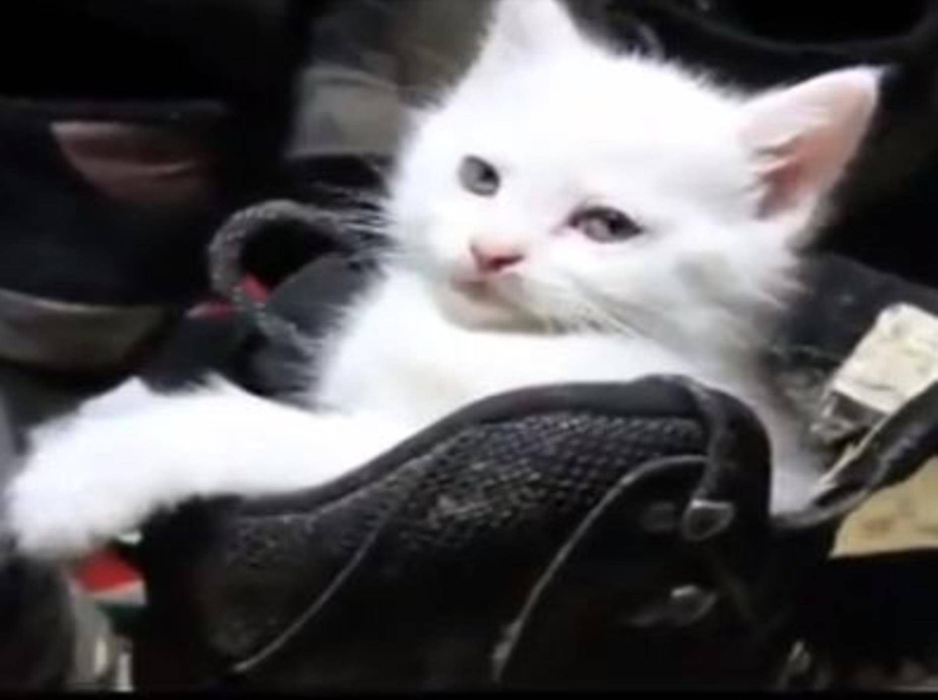 Hunde und Katzen beweisen: Gemütlichkeit ist relativ! — Bild: Youtube / ארז אבני