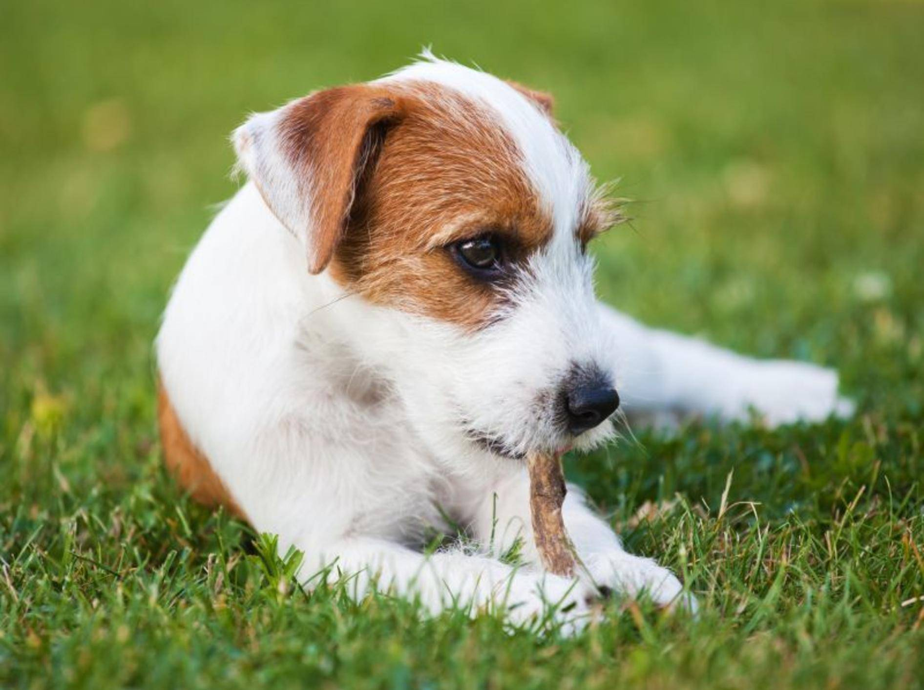 Da freut sich der Hund: Ein Leckerli für zwischendurch kommt immer gut an! — Bild: Shutterstock / Christian Mueller