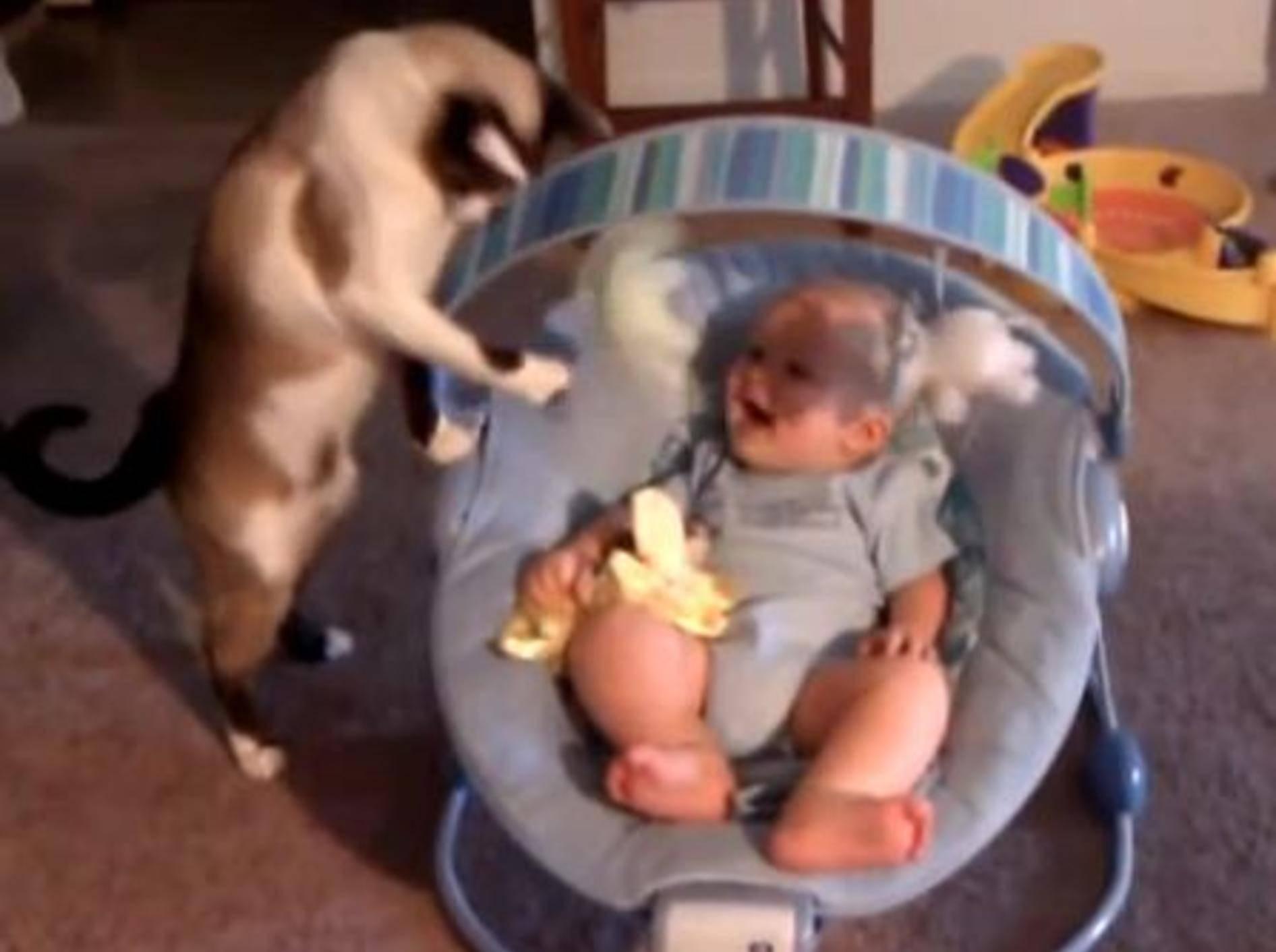 Süße Babysitter-Katze bringt Baby zum Lachen — Bild. Youtube / bowl300X02·