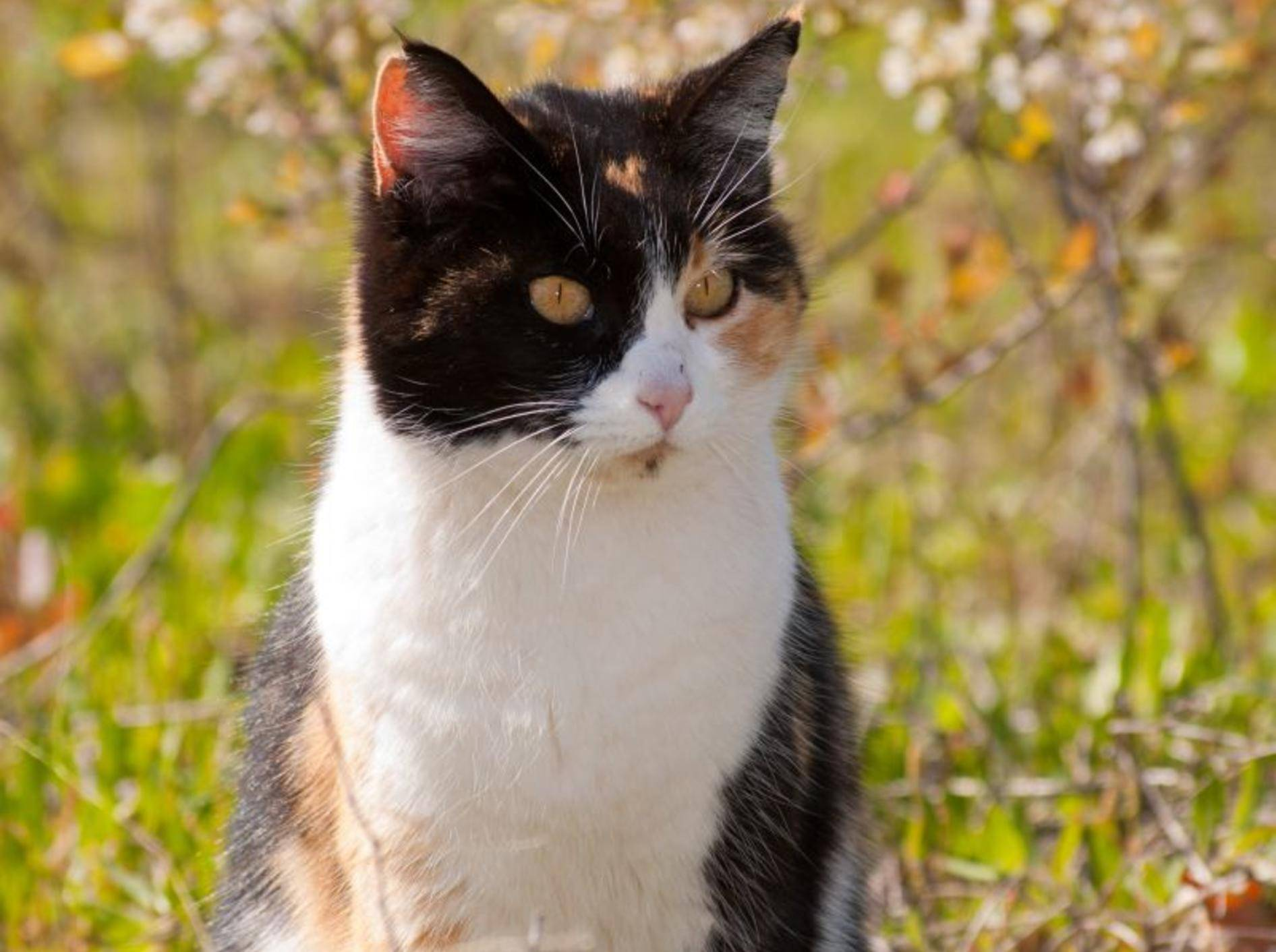 Bachblütentherapie für Katzen — Bild: Shutterstock / Sari ONeal